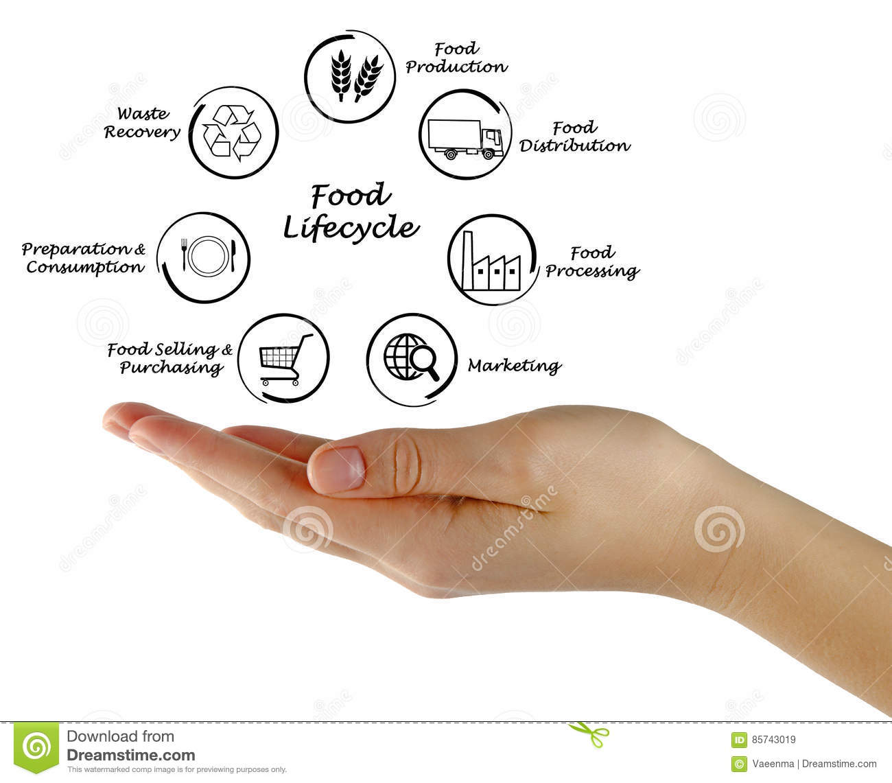 Food Lifecycle Stock Image Of Presenting Life 85743019 Cycle Also Bald Eagle Diagram In Addition