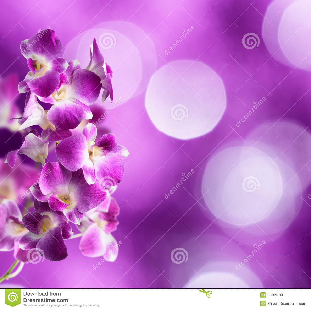 Purple And White Orchid Flowers Royalty Free Stock Photos