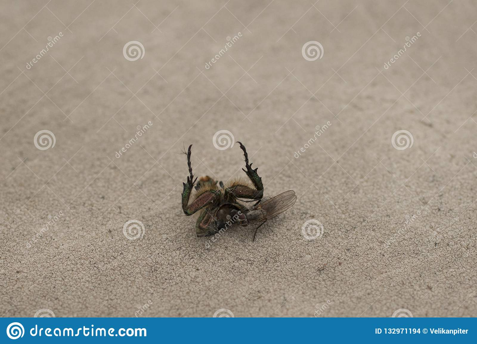 Food small flies. Weekdays in the world of insects.