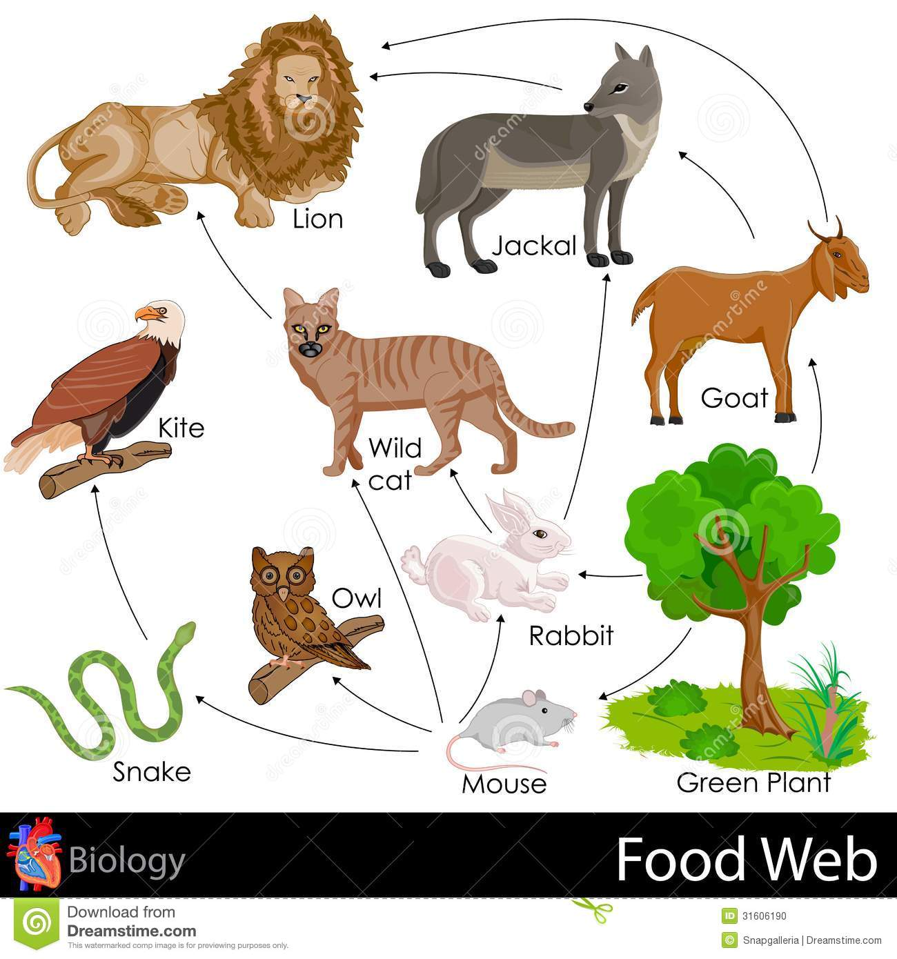 Food Web Stock Photo - Image: 31606190