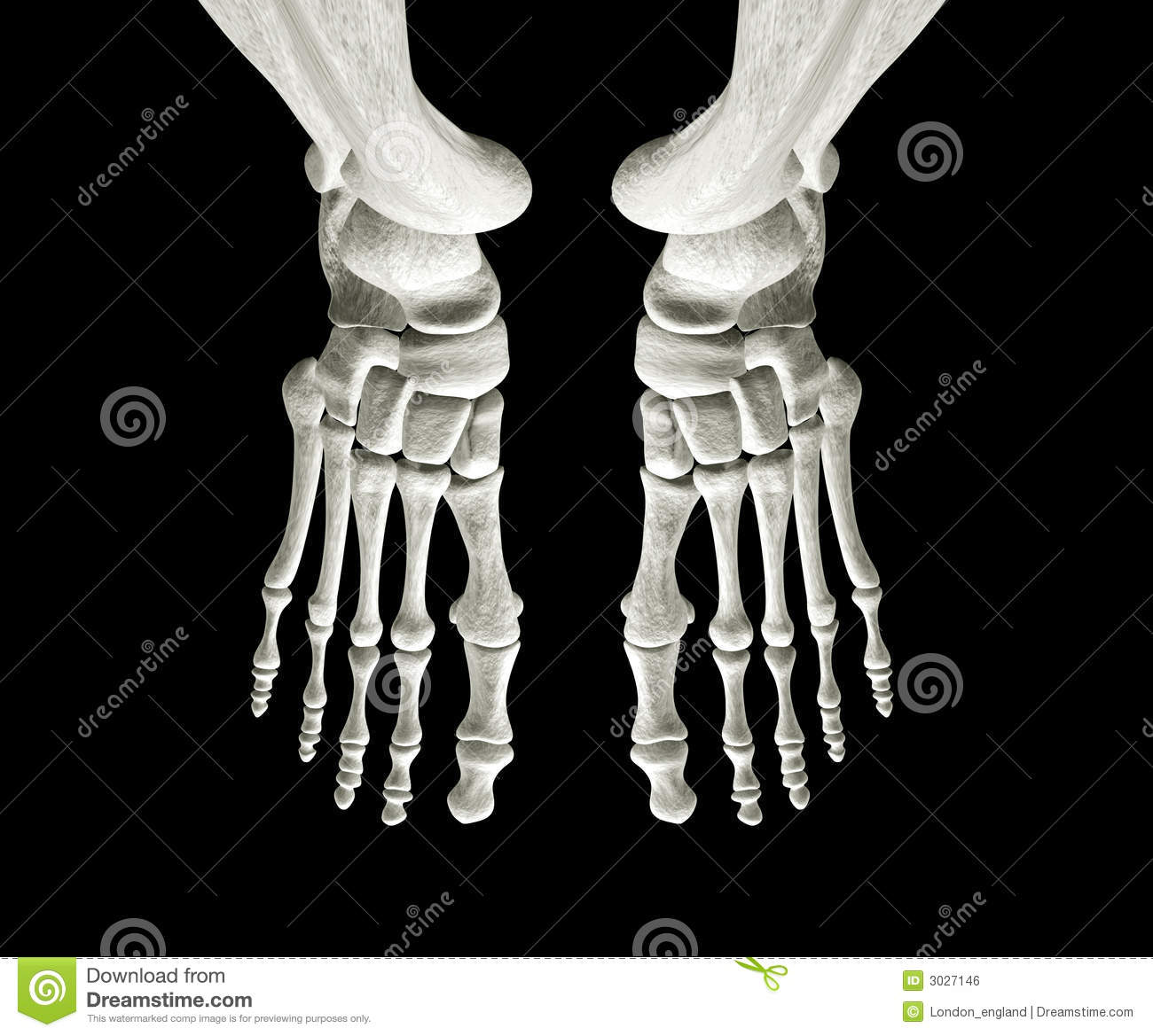 Foot Bones Stock Illustration Illustration Of Broken 3027146