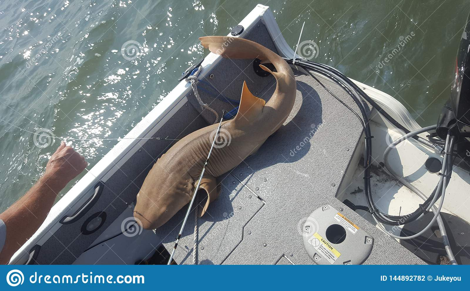 5 foot nurse shark caught boat fishing
