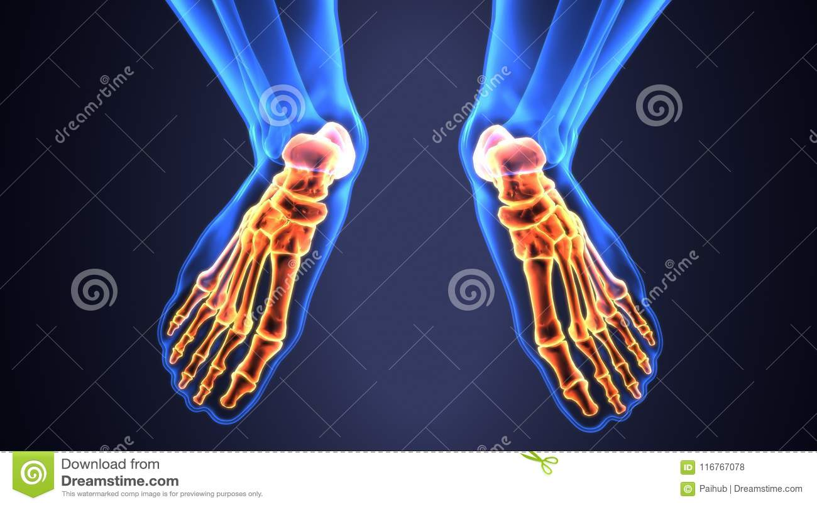 Foot Bones Anatomy Cheap Bones In The Foot Diagram Left Foot Bone