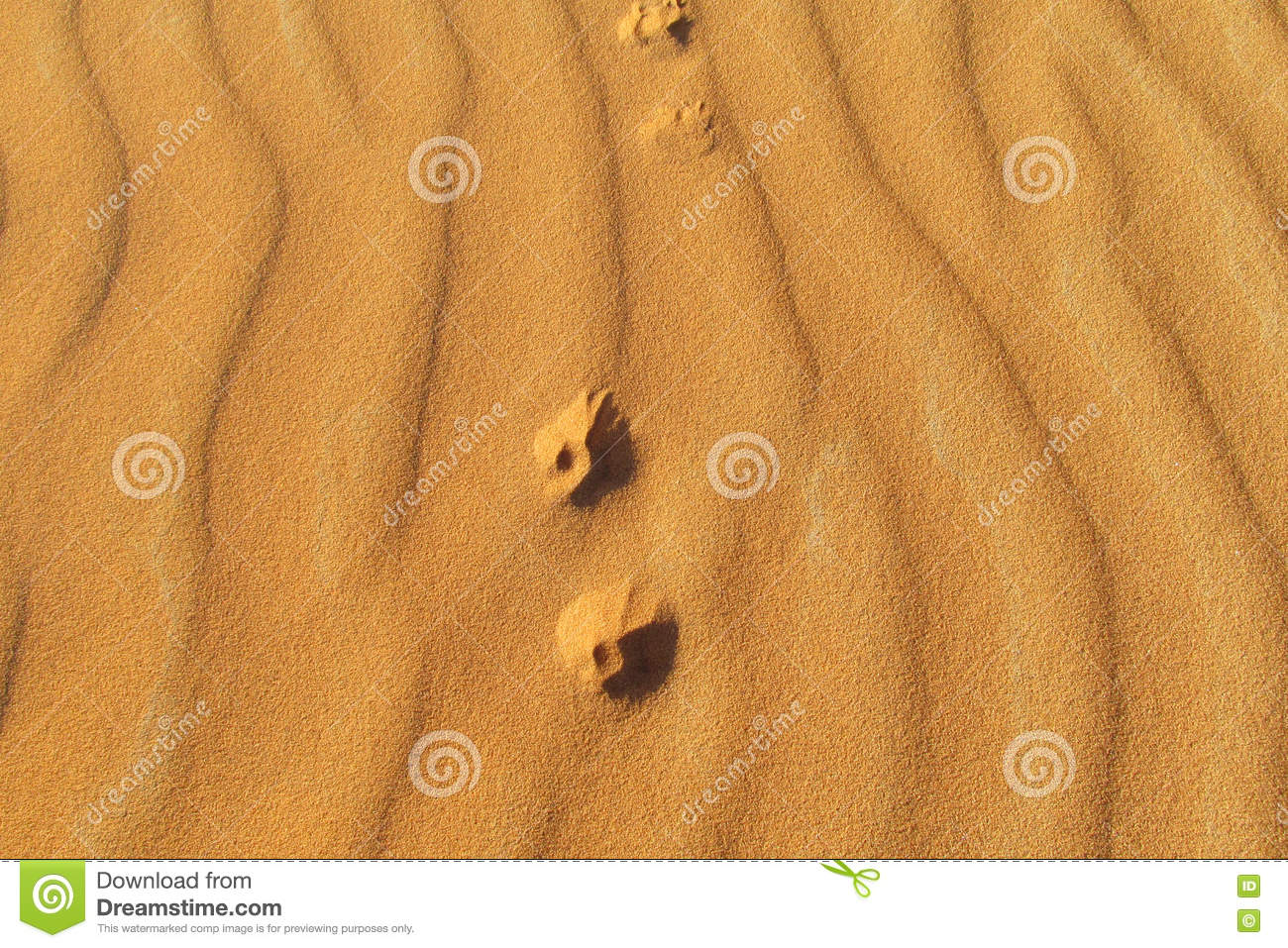 Foot prints of a small fox on sand