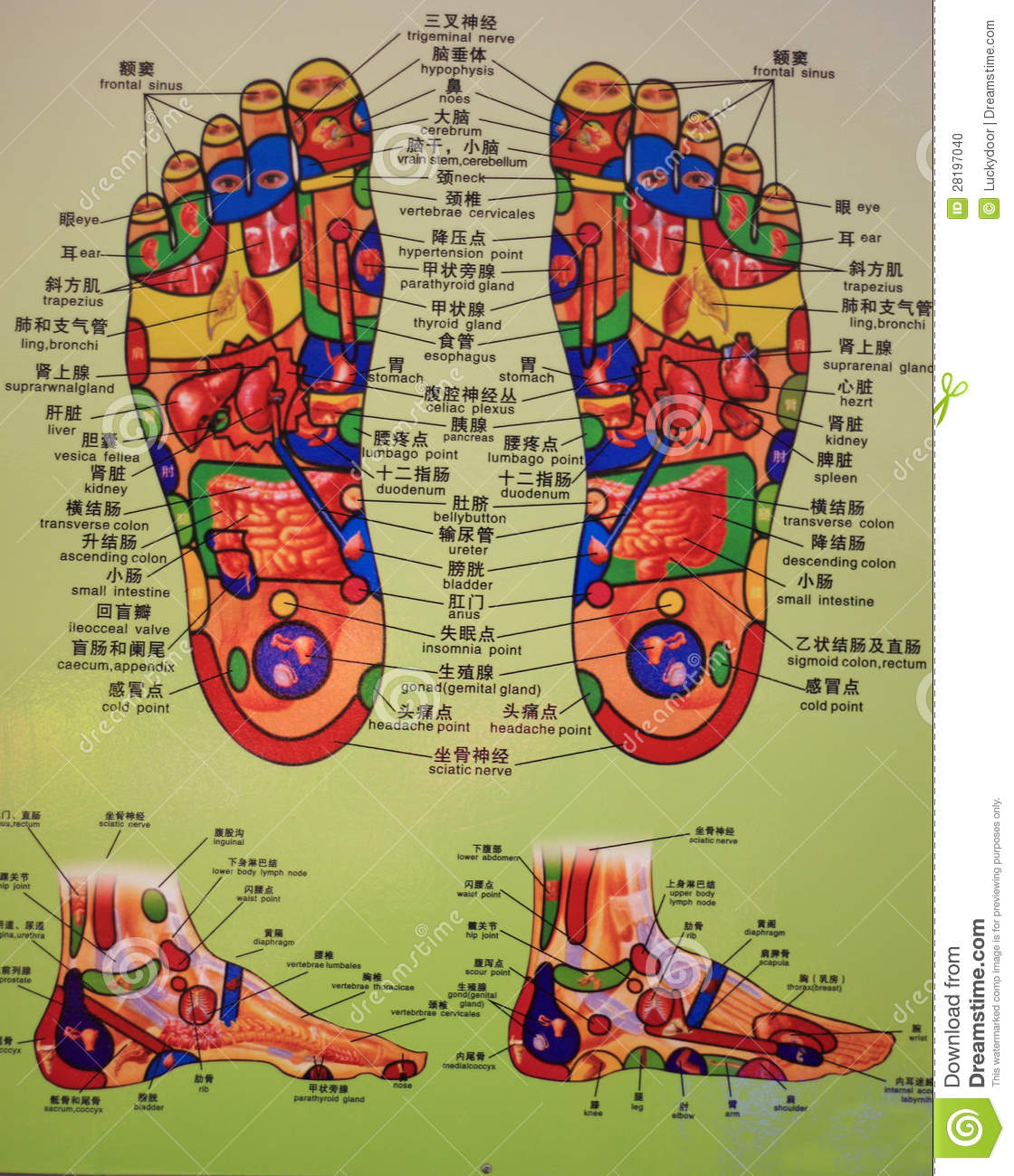 Foot massage chart editorial image image of therapy 28197040