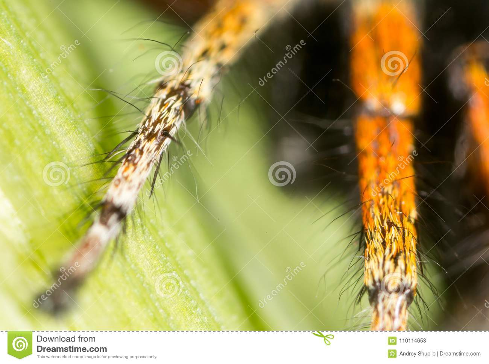 Foot spider in nature. super macro
