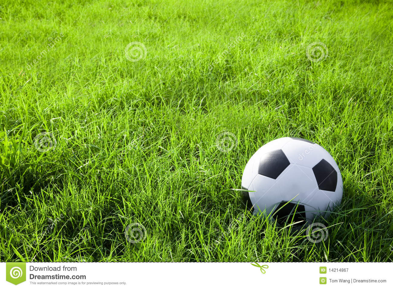 football or soccer ball on the green field stock image