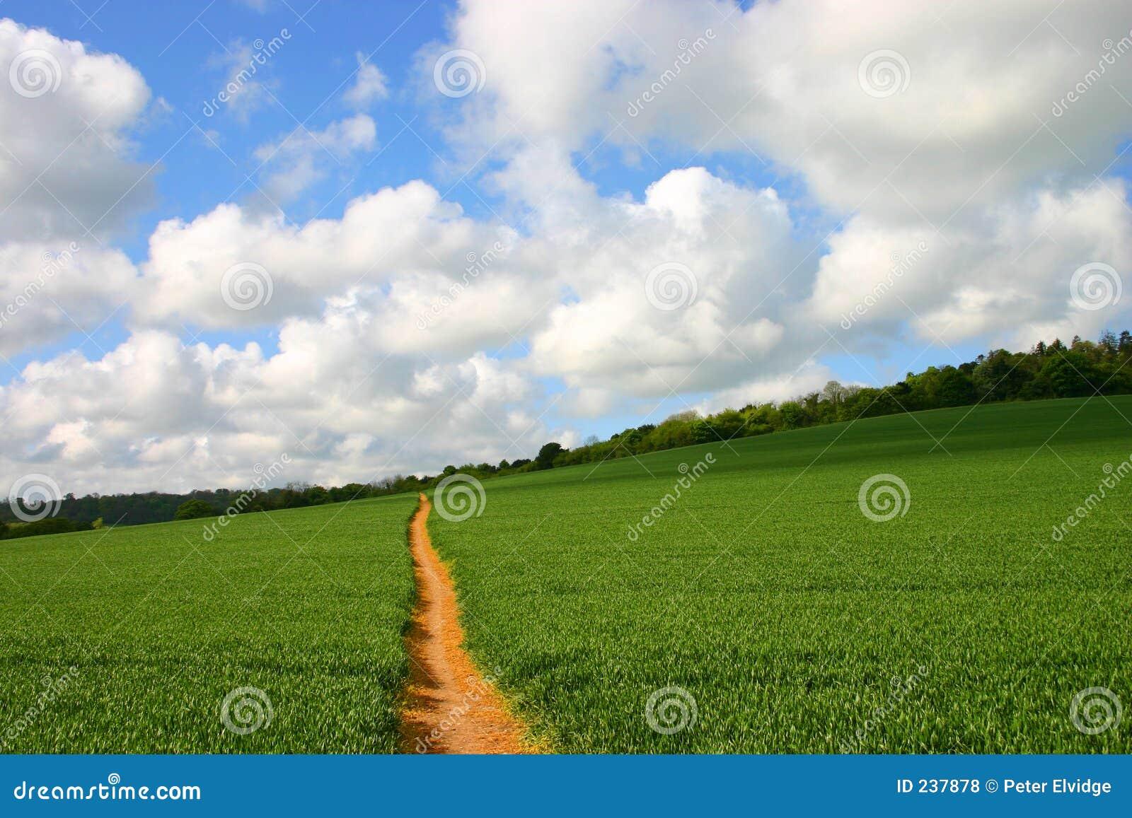 Footpath поля сиротливый