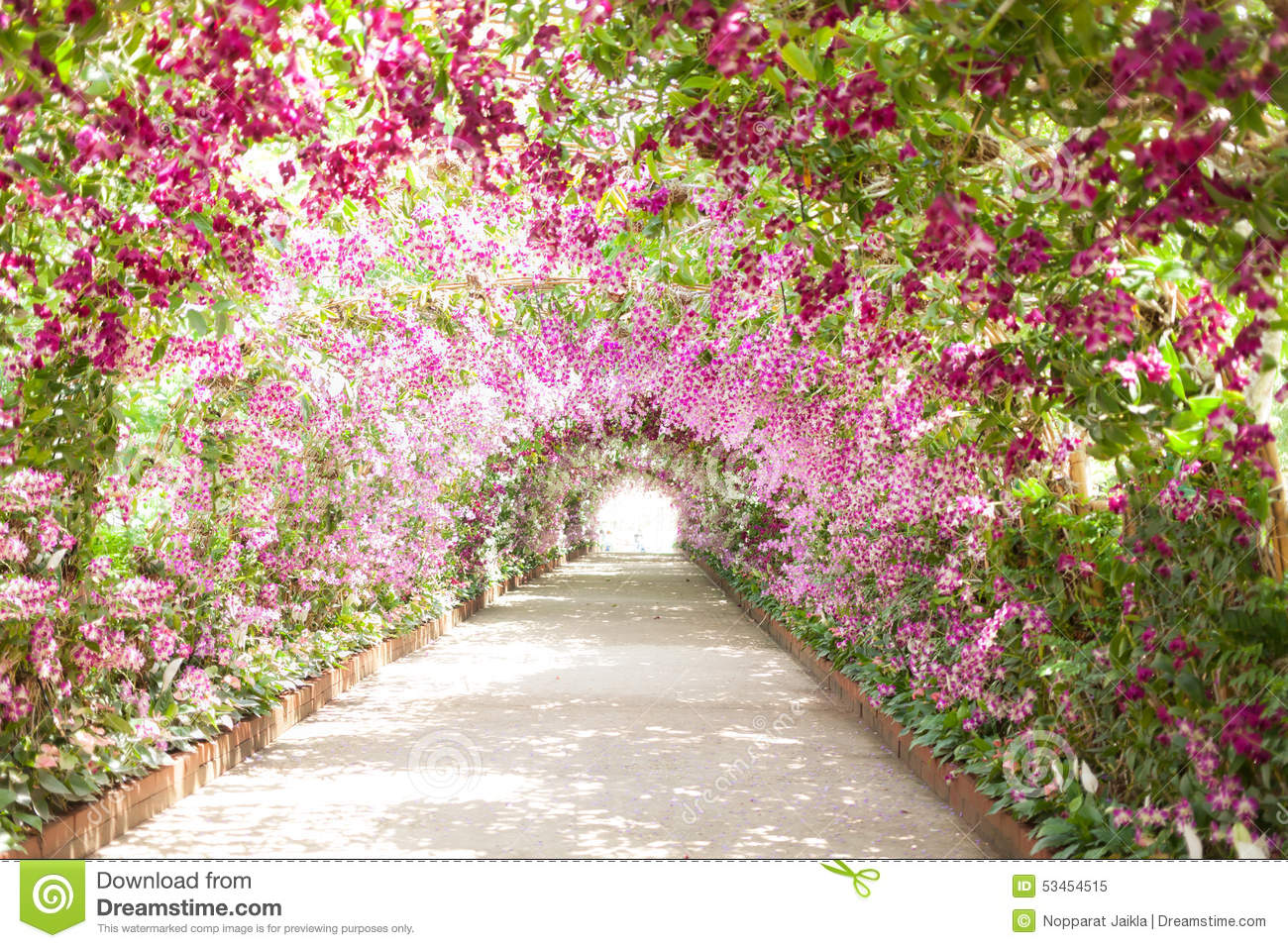 Footpath in a botanical garden with orchids lining the - Paisajes de jardines ...