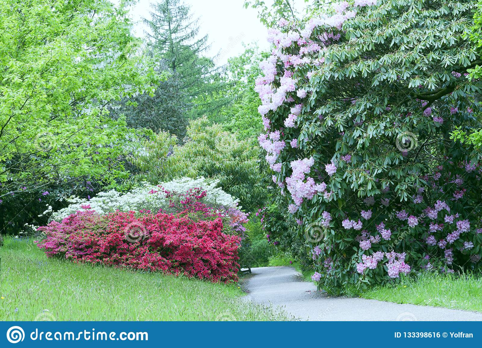 Footpath Between Flowering Shrubs In Spring Garden Stock Photo