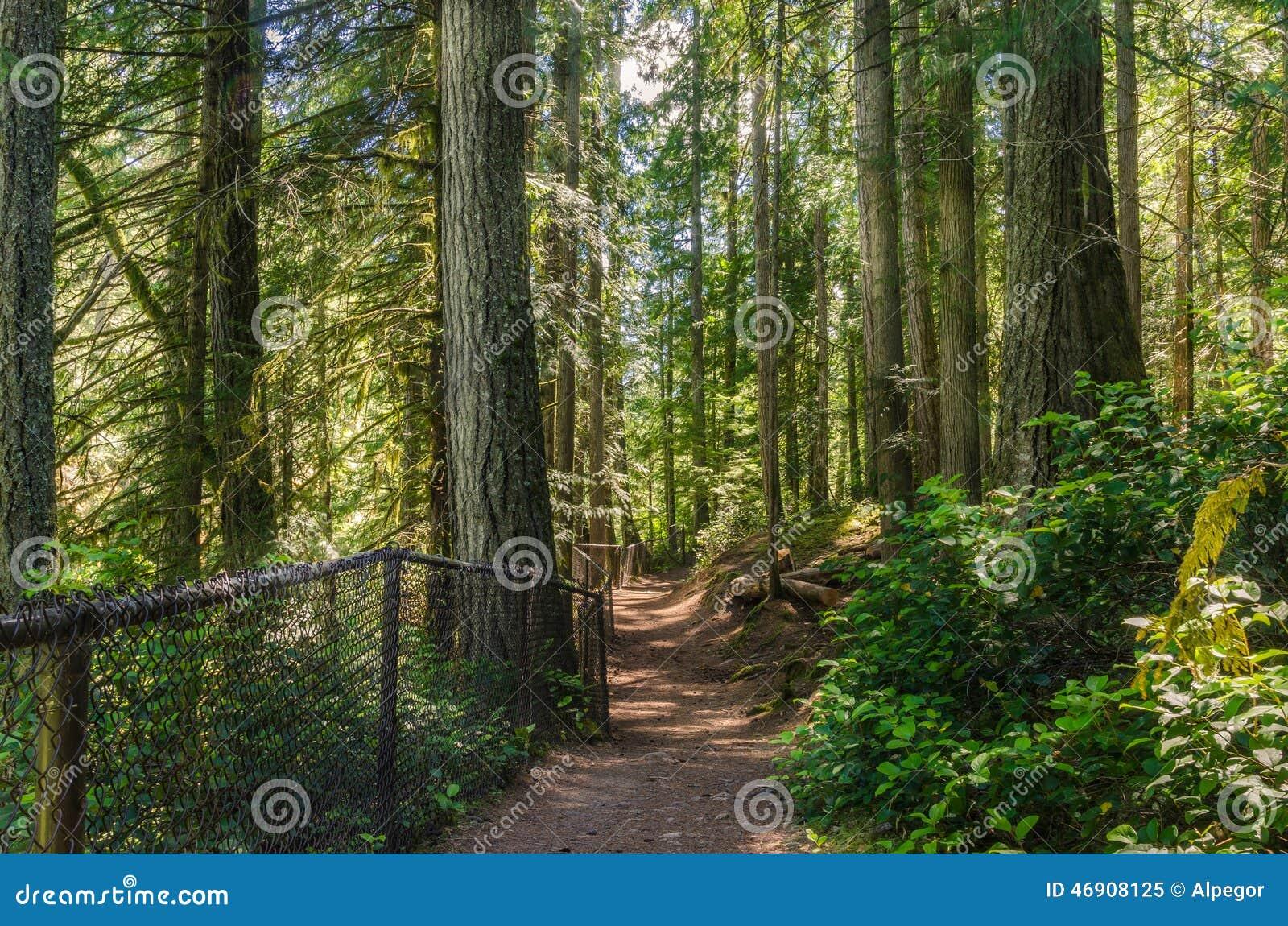 Footpath through a Forest