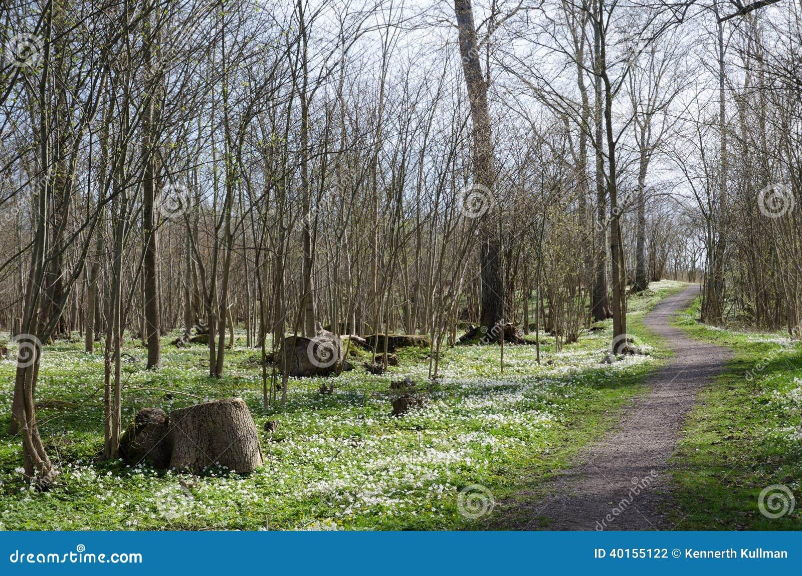 Footpath otaczający drewniani anemony