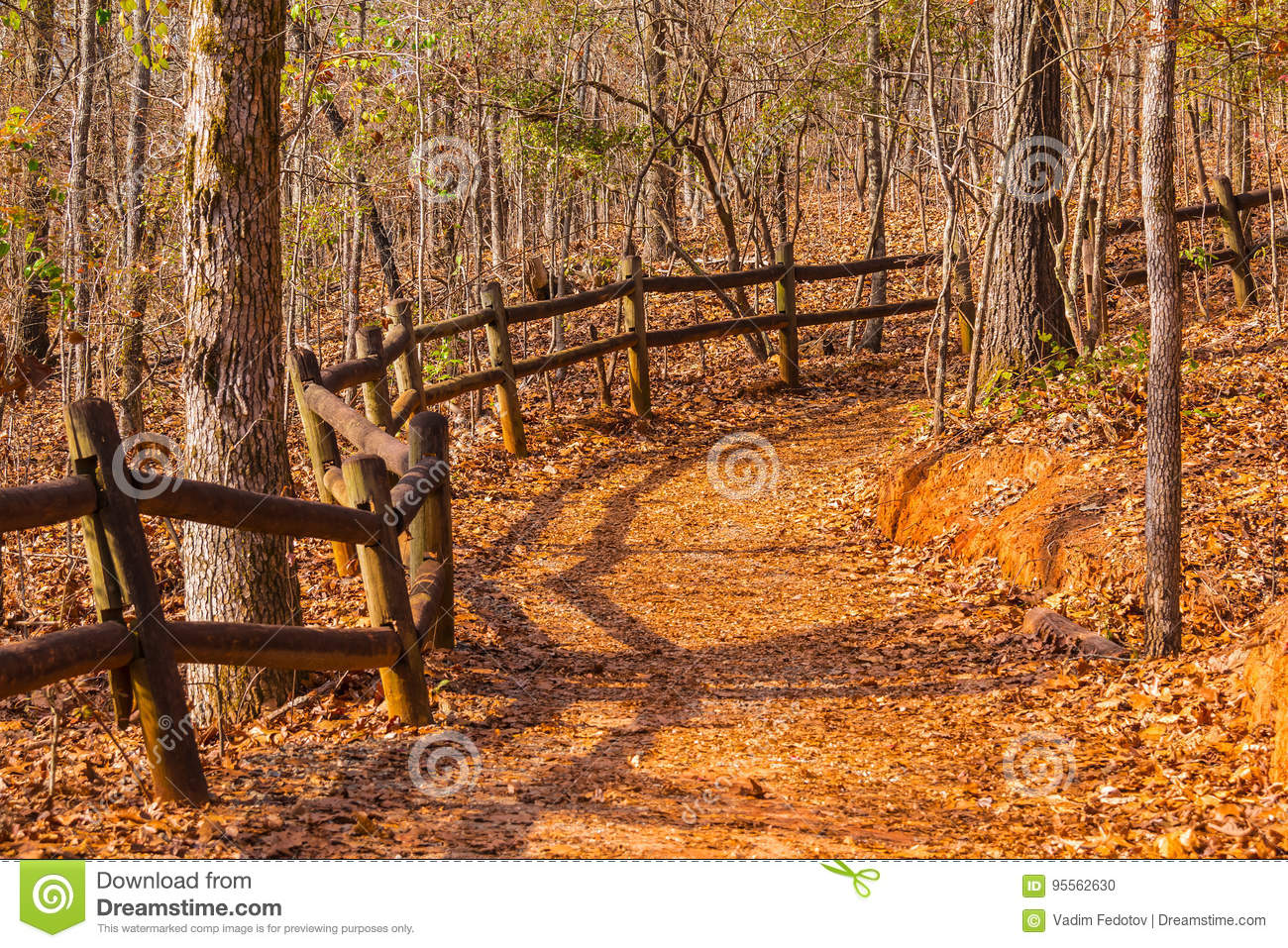 Download Footpath And Thicket In Providence Canyon State Park, Georgia, USA Stock Photo - Image of branch, outdoors: 95562630