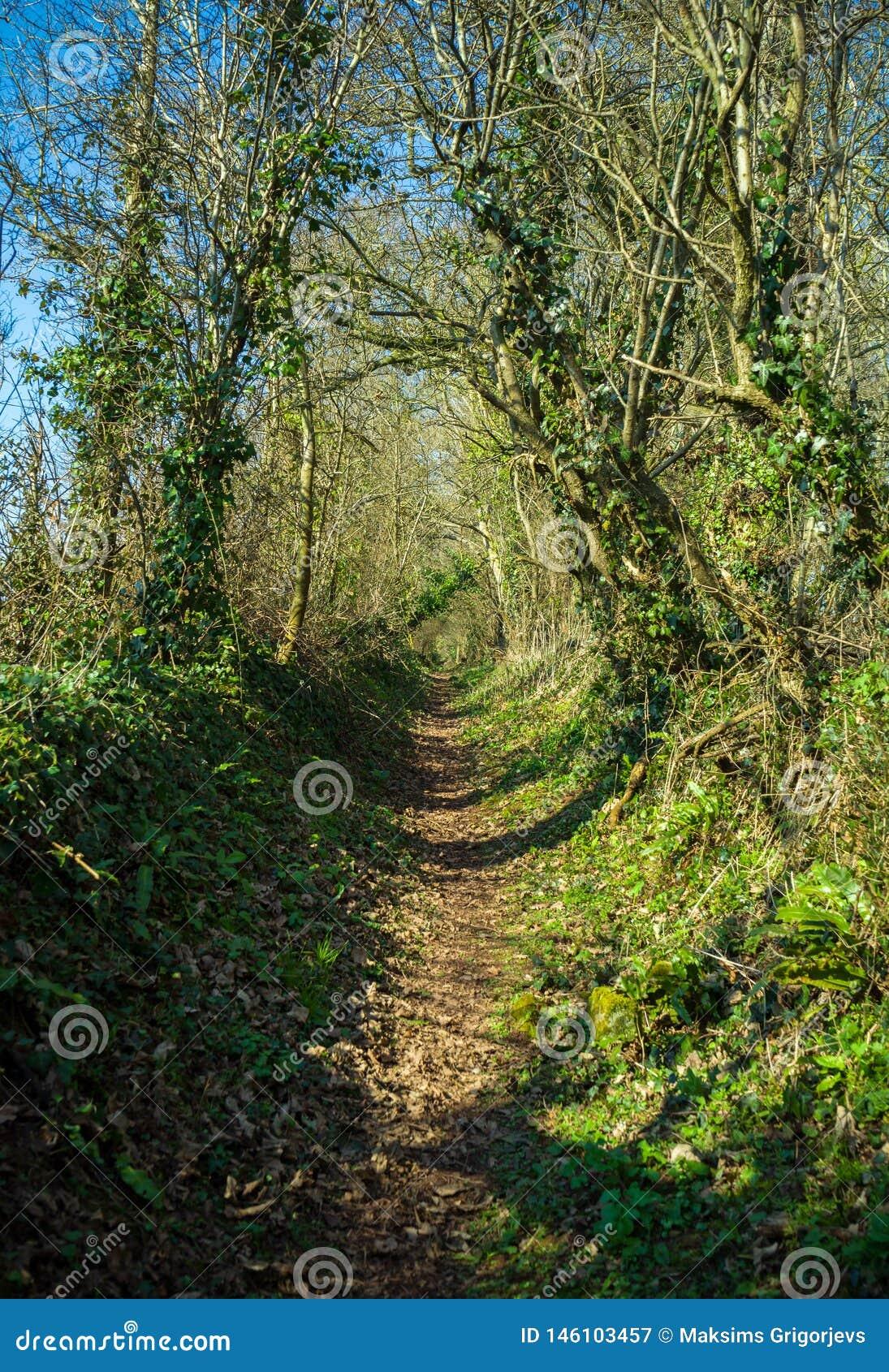 Footpath through typical British English woodland in spring