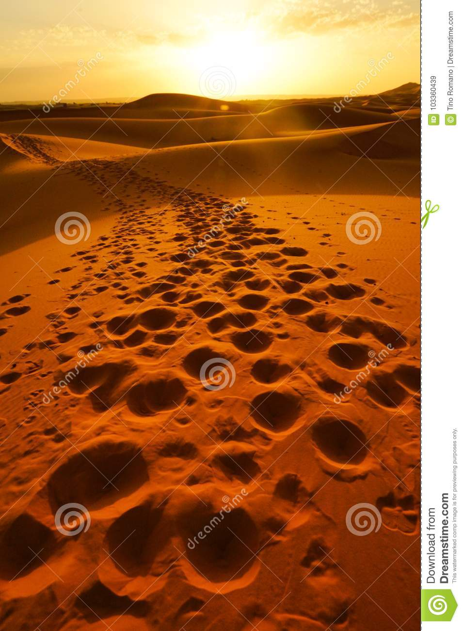 The footprints left behind after dromedary passage on the desert dunes of Morocco`s ERG