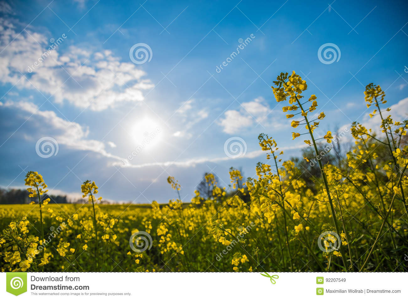 Fop perspective of meadow yellow blossoms sunlight spring