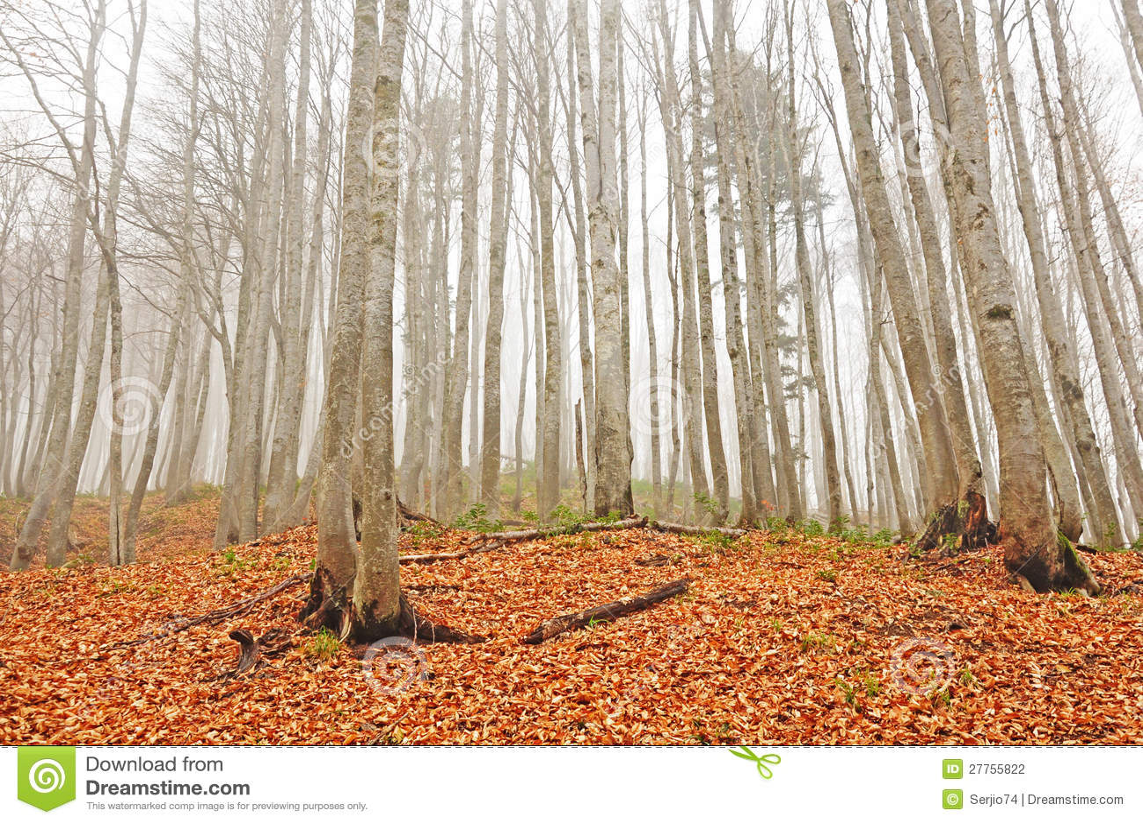 Forêt.