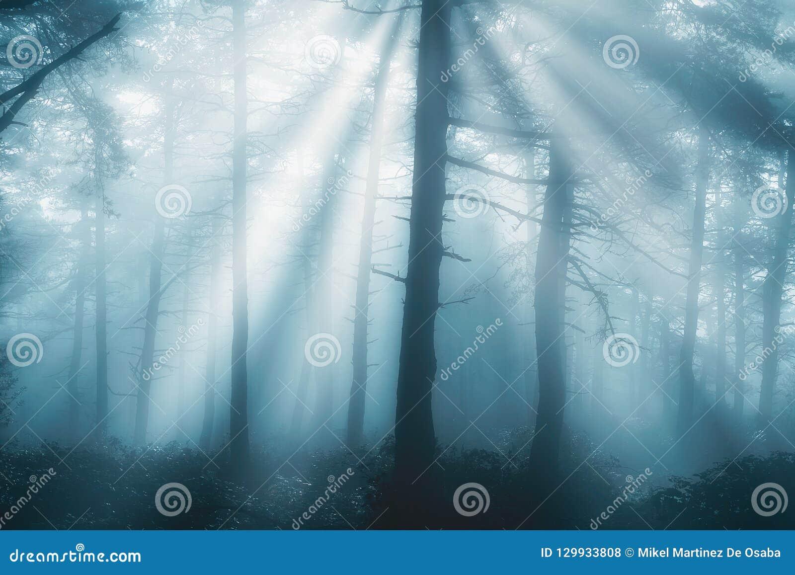 Forêt au matin avec des rayons