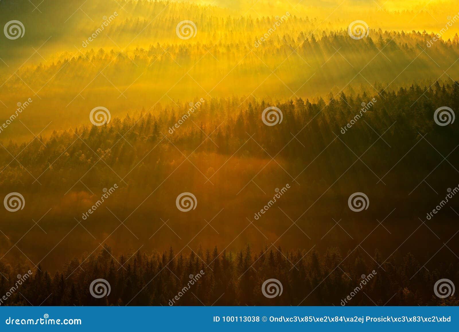 Forêt avec des rayons du soleil Matin avec le soleil Matin brumeux brumeux froid dans une vallée de chute de parc de Bohème de la
