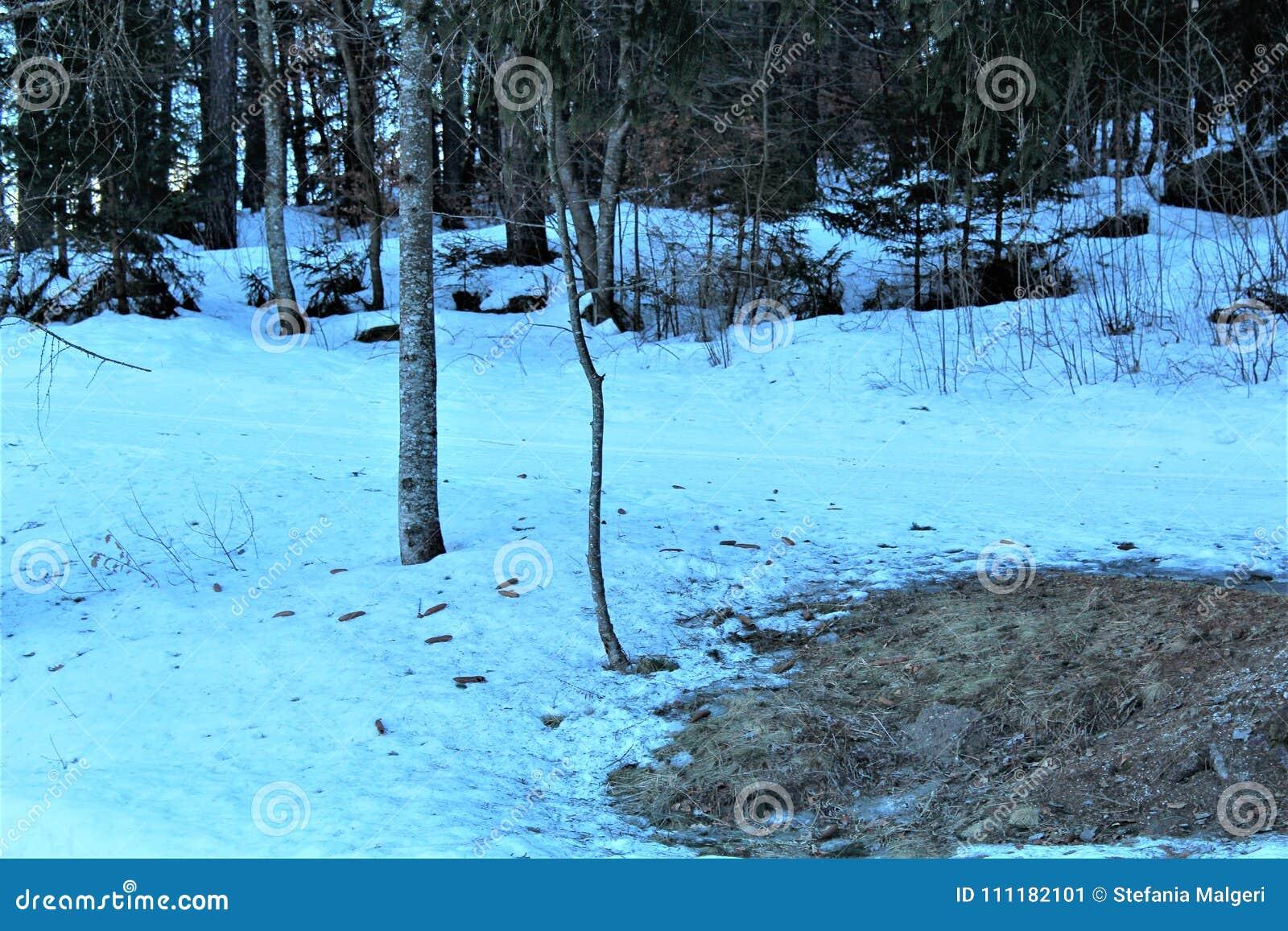 Forêt avec la neige