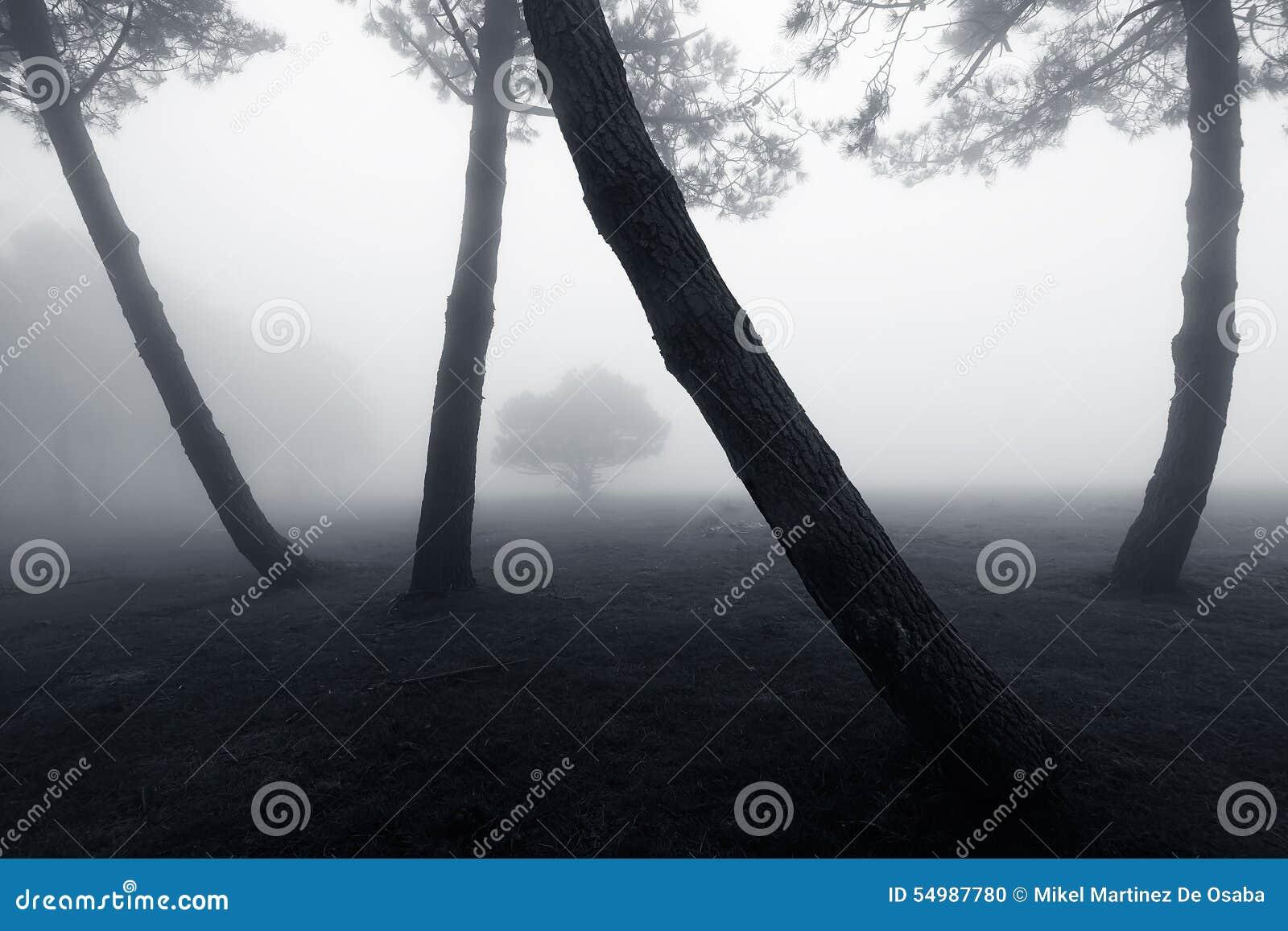 Forêt avec le brouillard et l arbre isolé