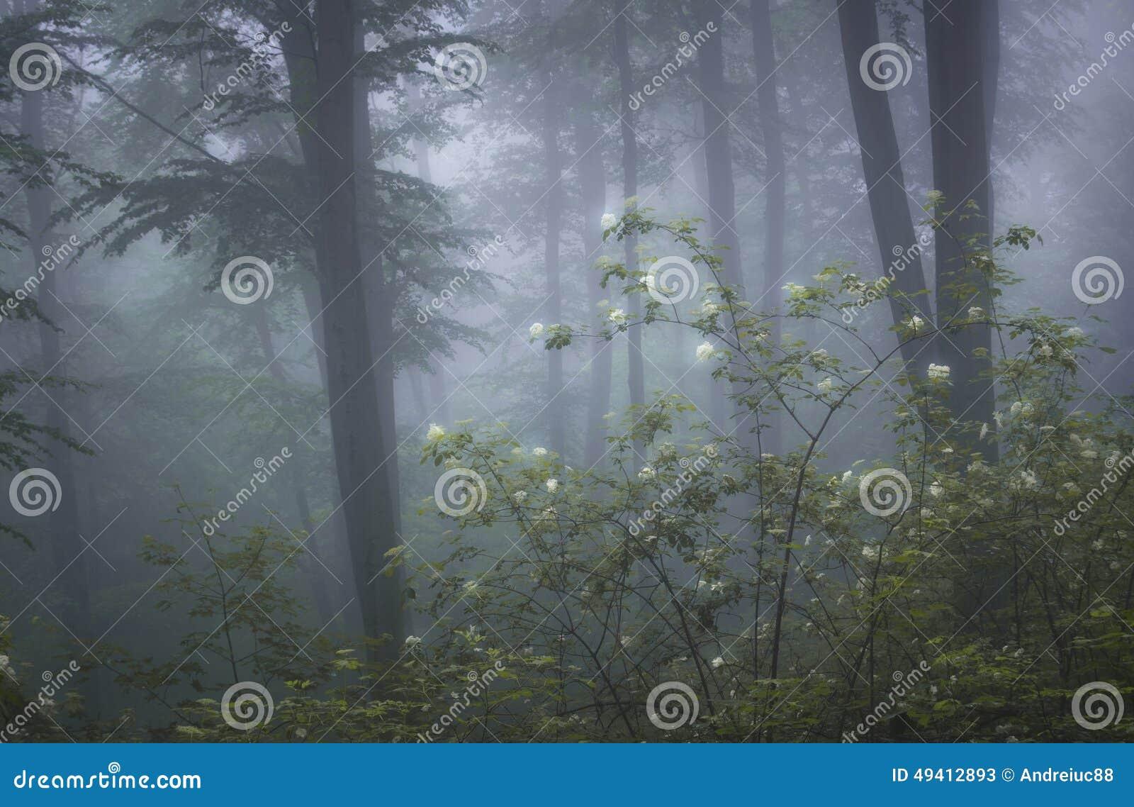 Forêt avec le brouillard et les fleurs en fleur