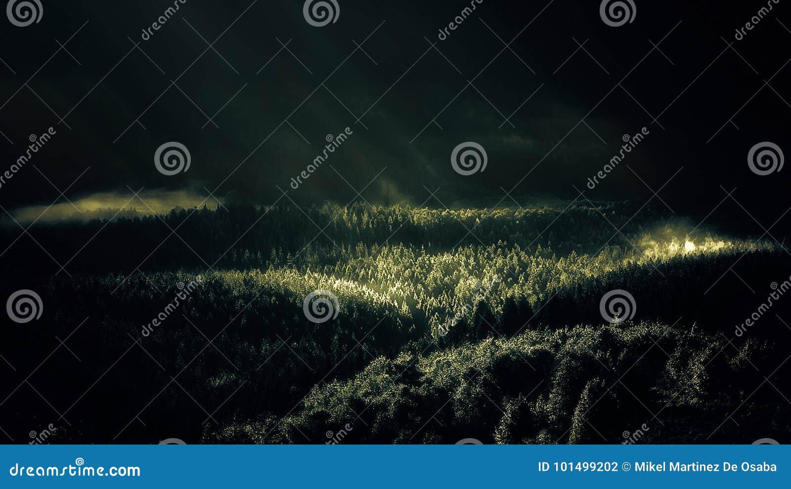 Forêt brumeuse avec des rayons du soleil au matin