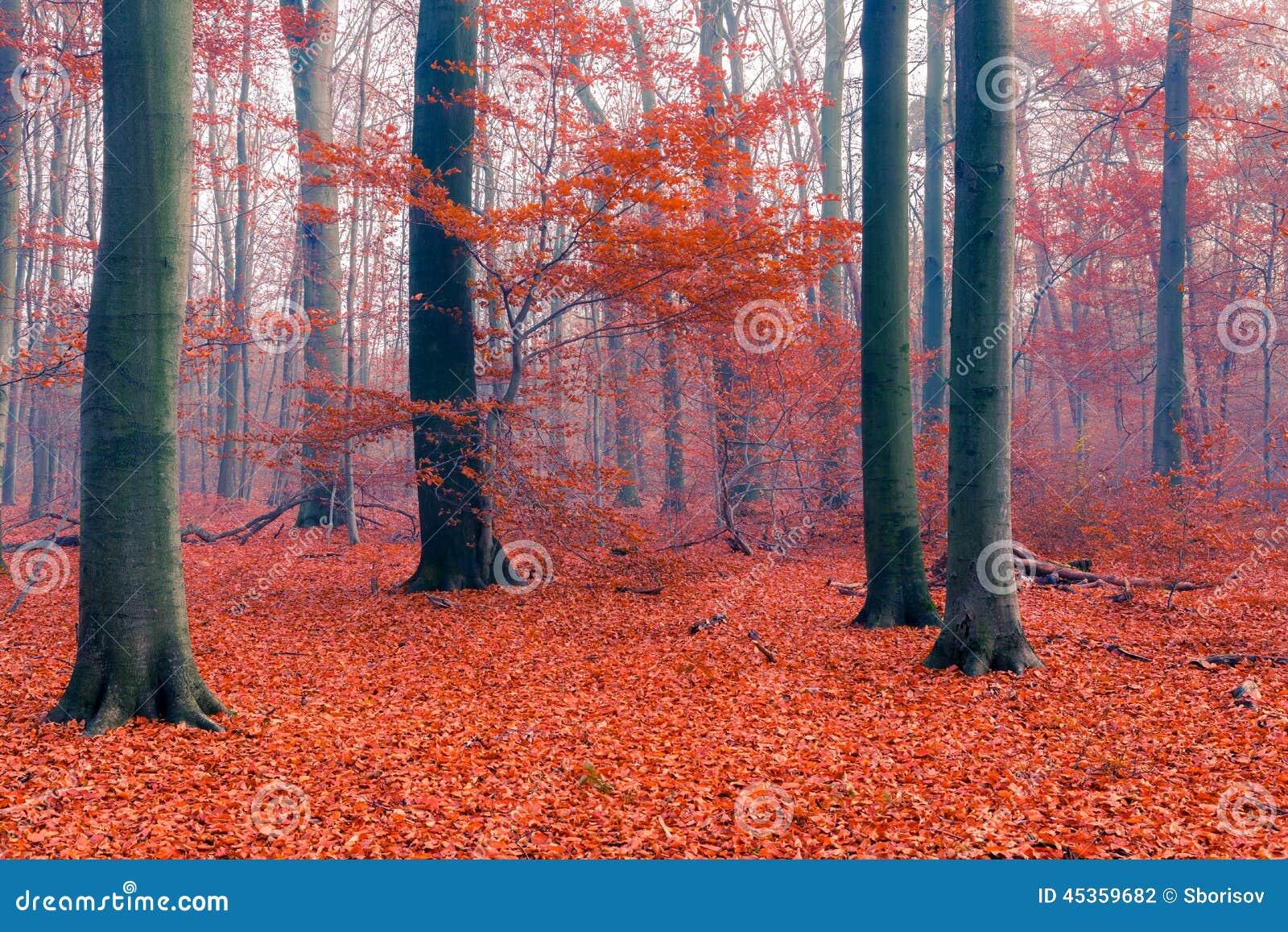 Forêt brumeuse d automne
