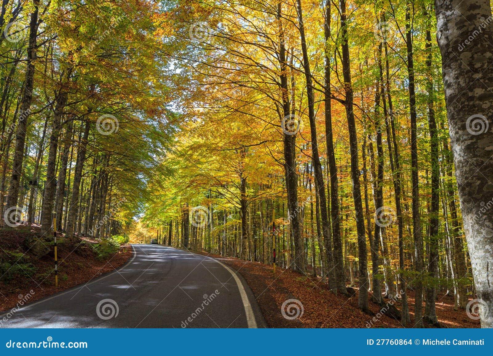 Forêt colorée de hêtre en Toscane