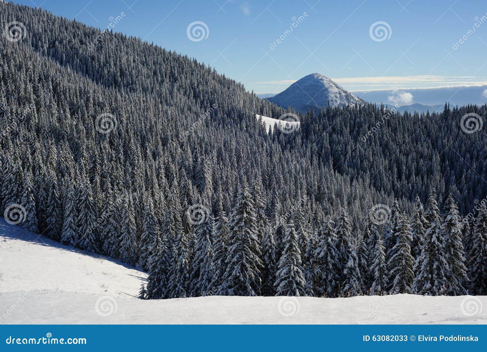 Download Forêt congelée image stock. Image du côte, montagnes - 63082033
