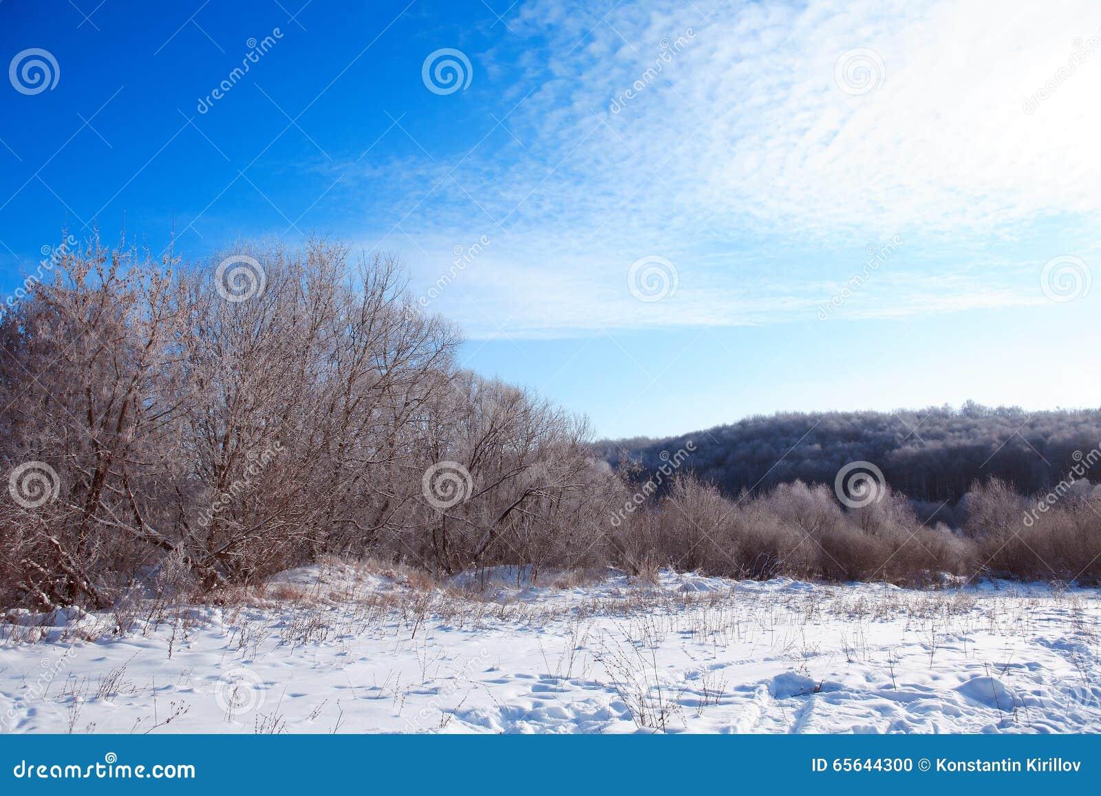 Forêt congelée