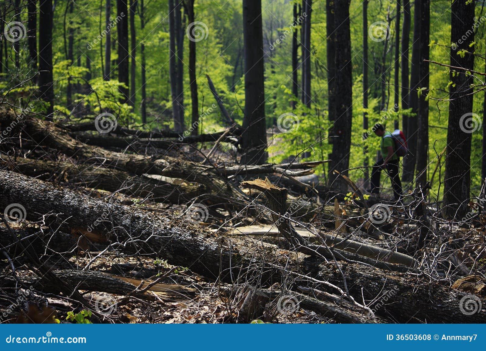 Forêt désolée