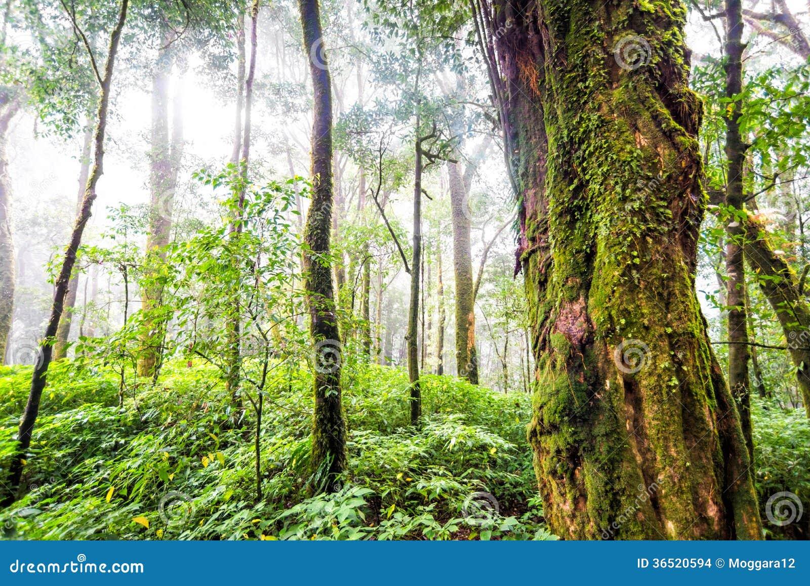 Forêt d arbre dans la saison d automne de la Thaïlande