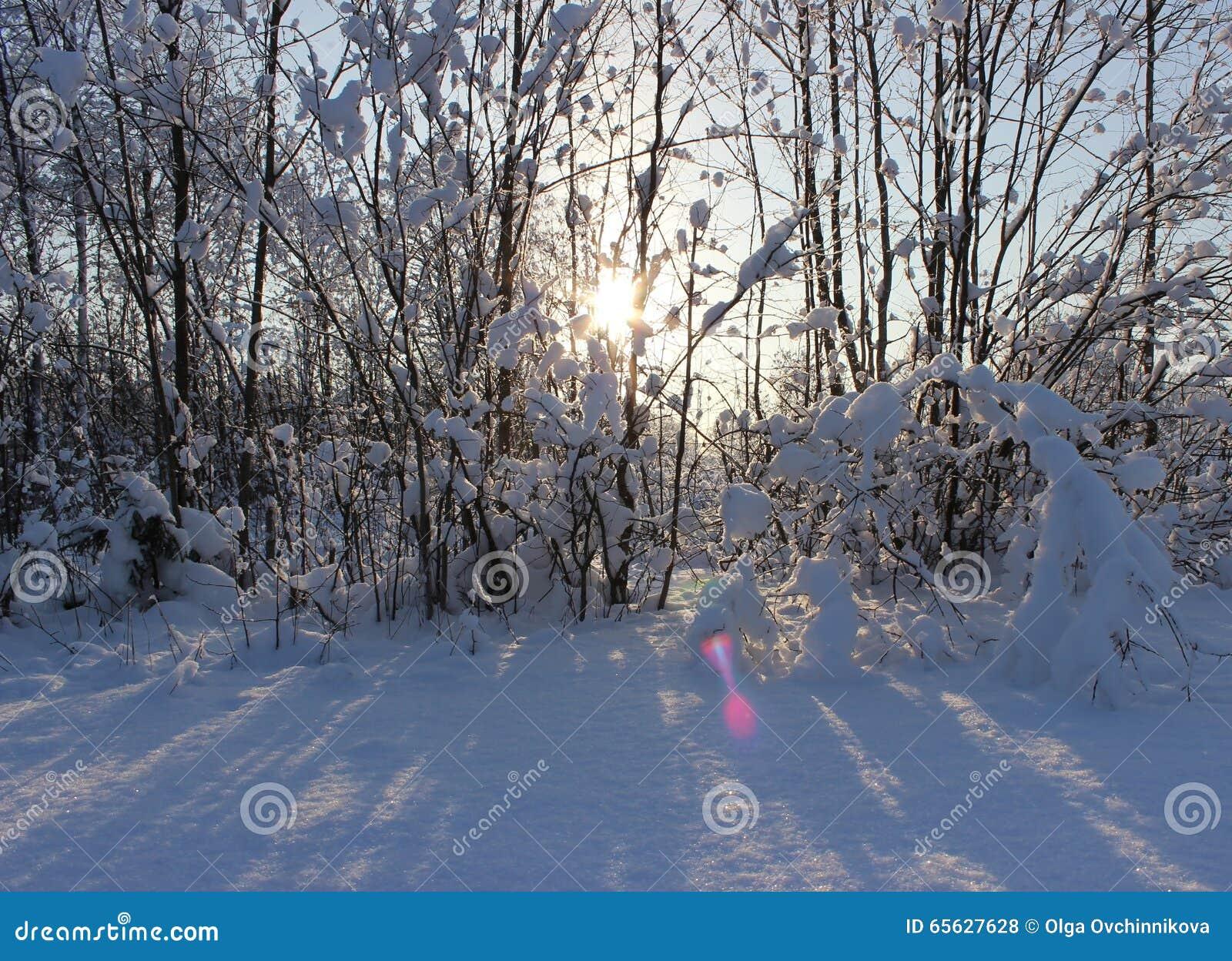 Forêt d hiver après chutes de neige sur Noël dans les morts du winte