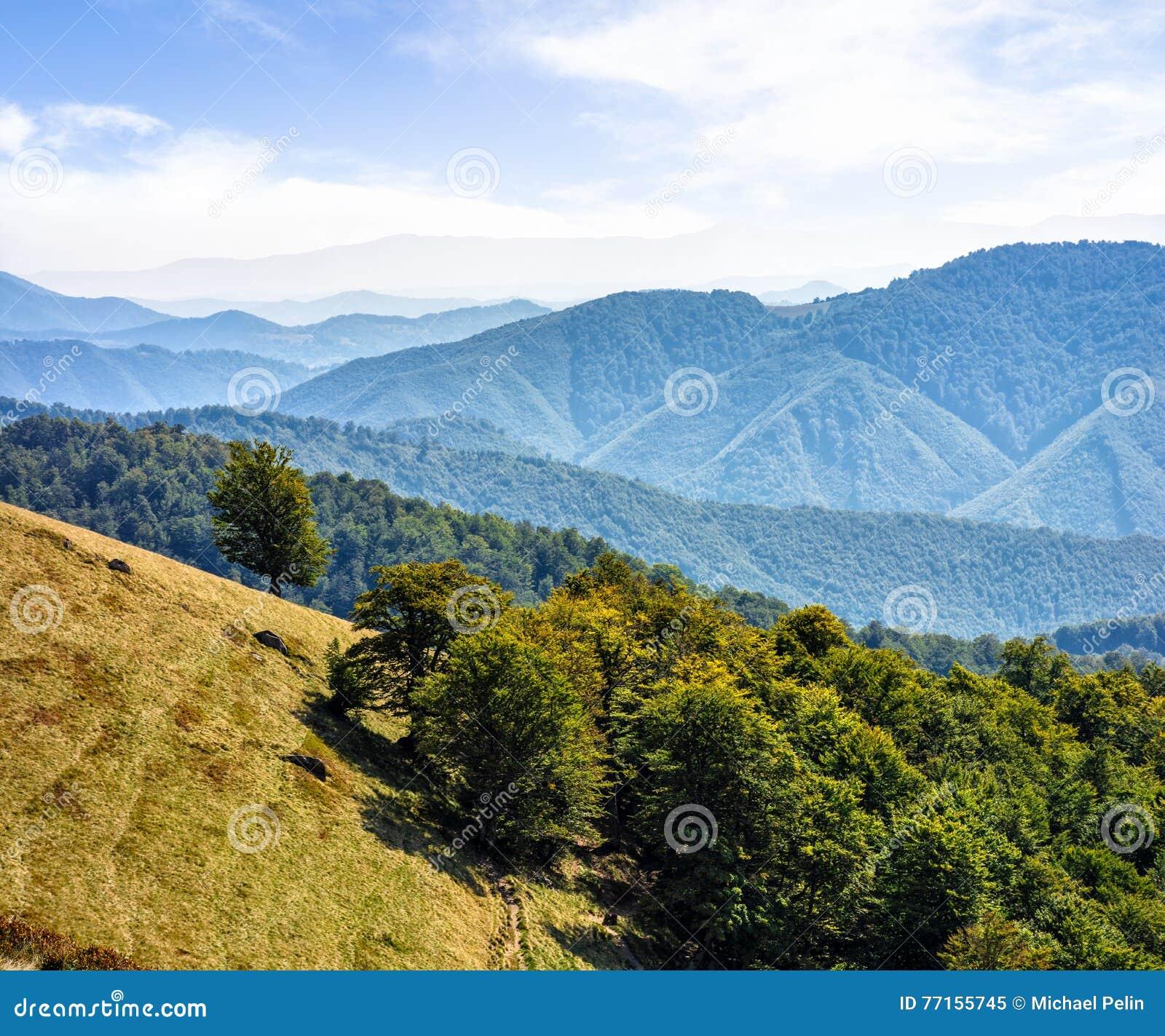 Forêt d un côté de colline de montagne