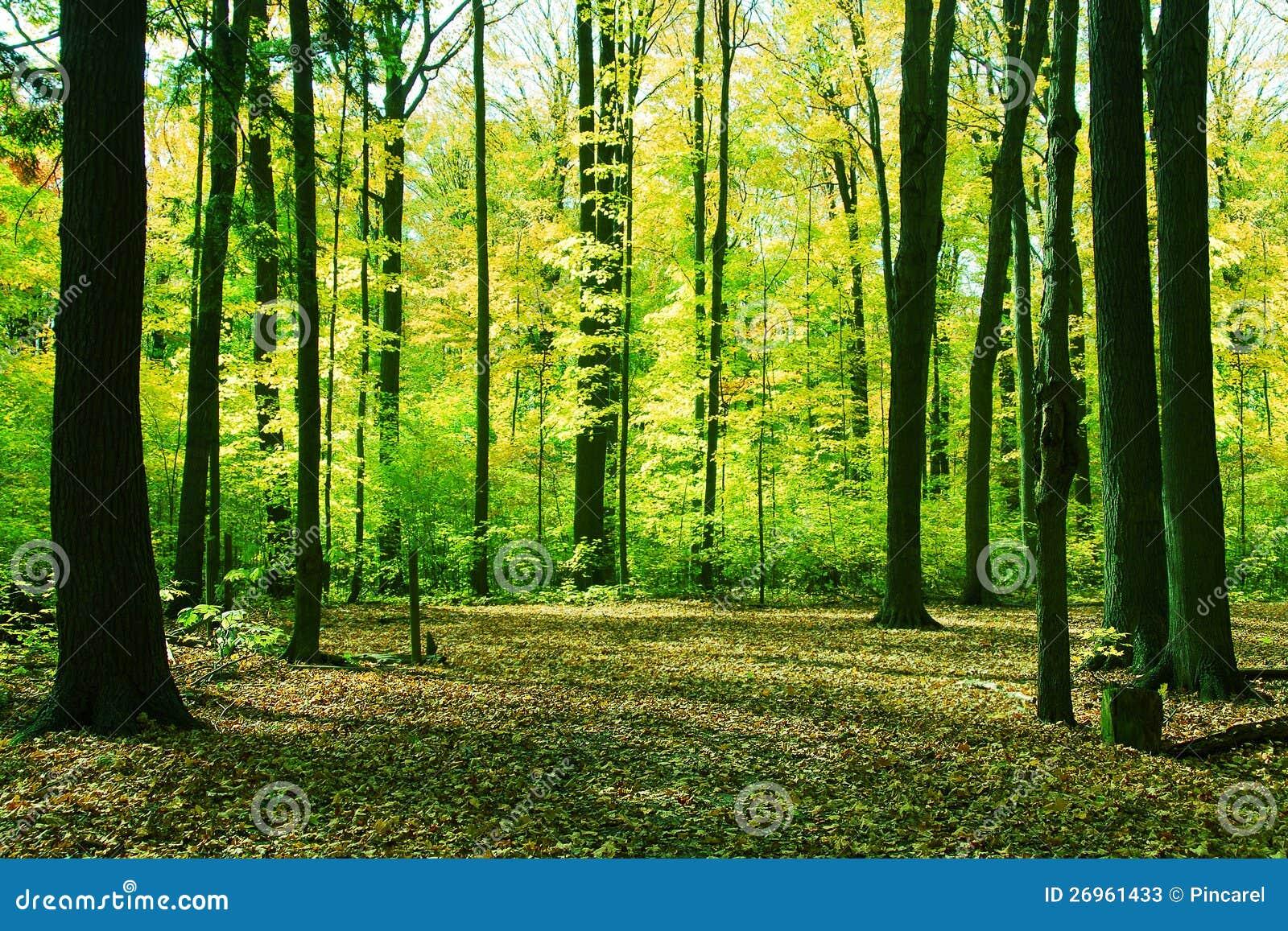 For t dans le printemps photos stock image 26961433 for Semer le gazon au printemps