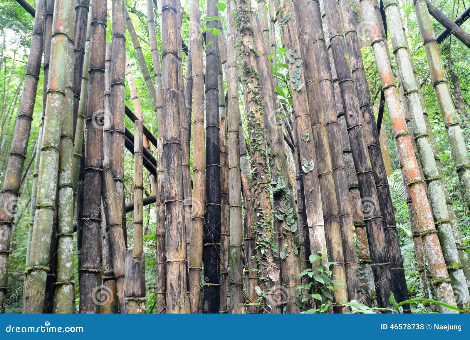 Forêt de bambou de dégradation