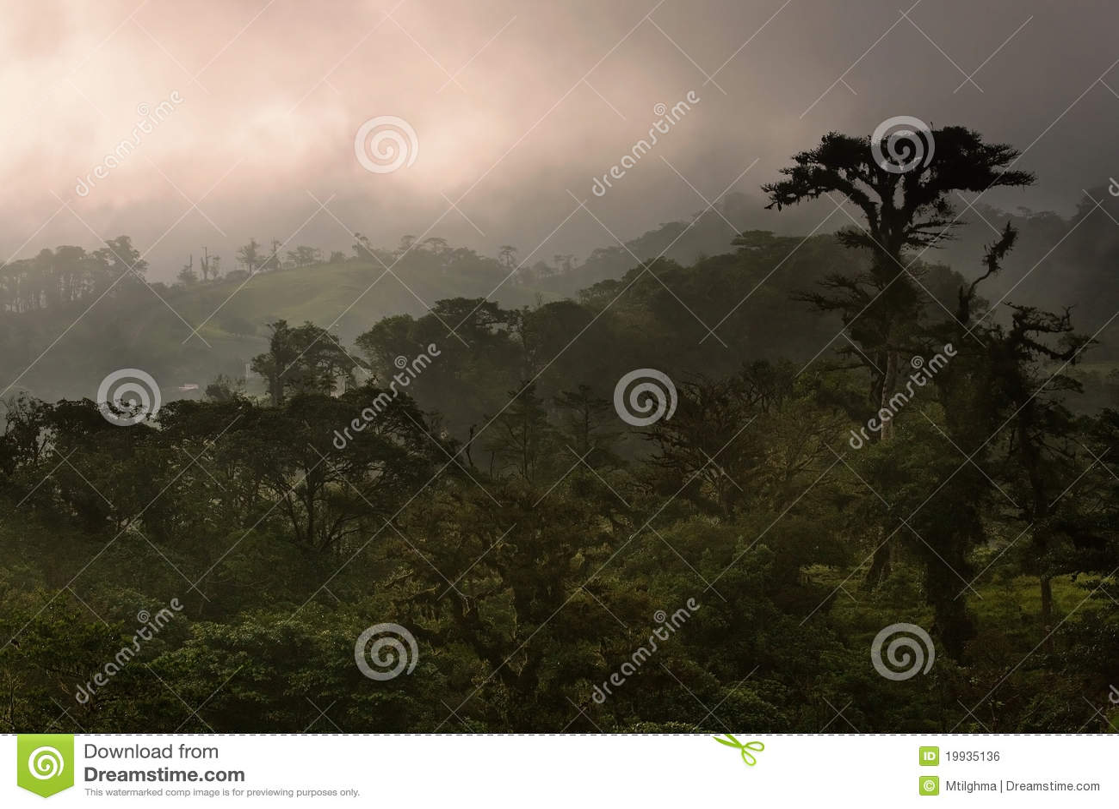 Forêt de nuage du Costa Rica