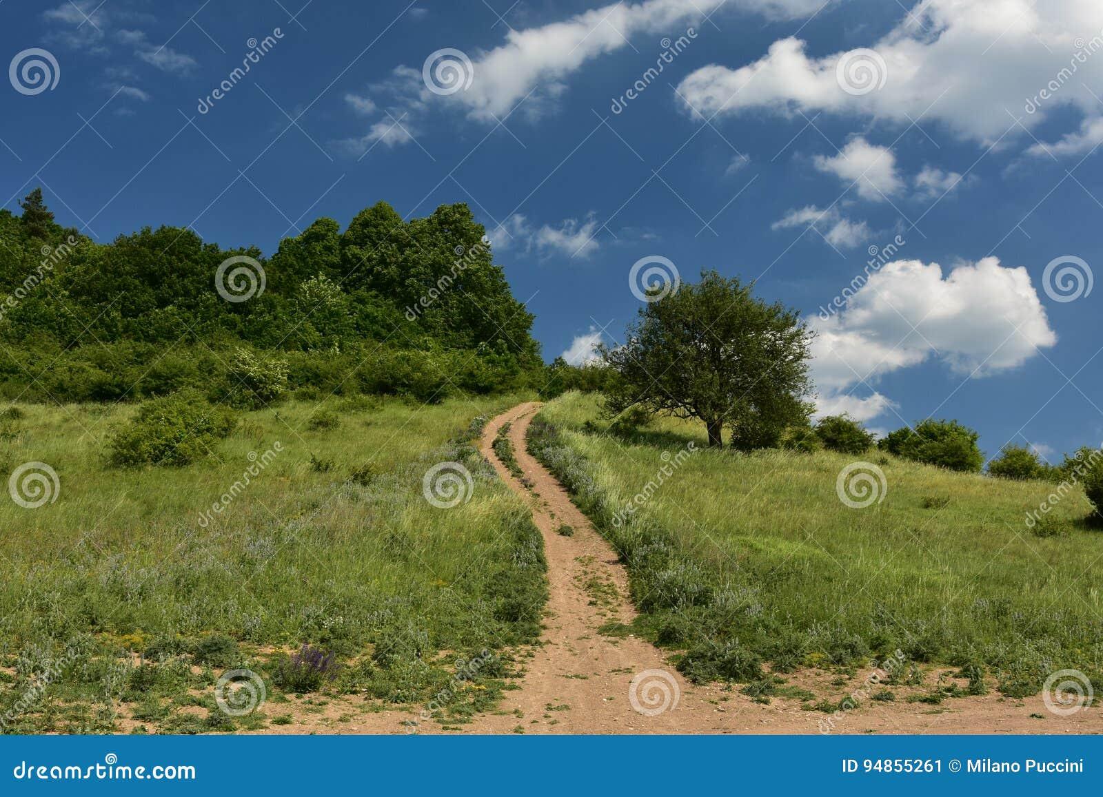 Forêt de pied