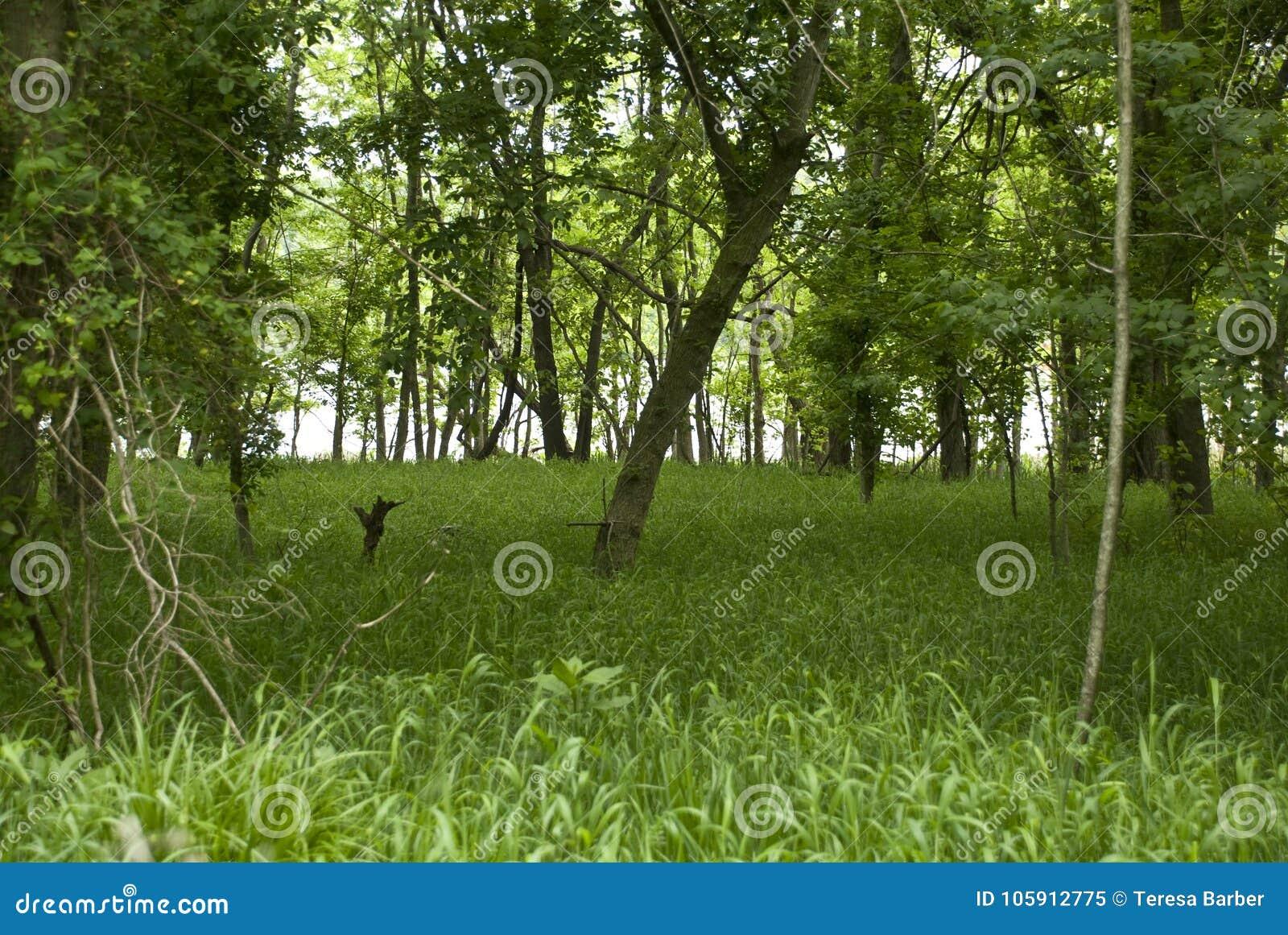 Forêt de rivière de région boisée sur James River