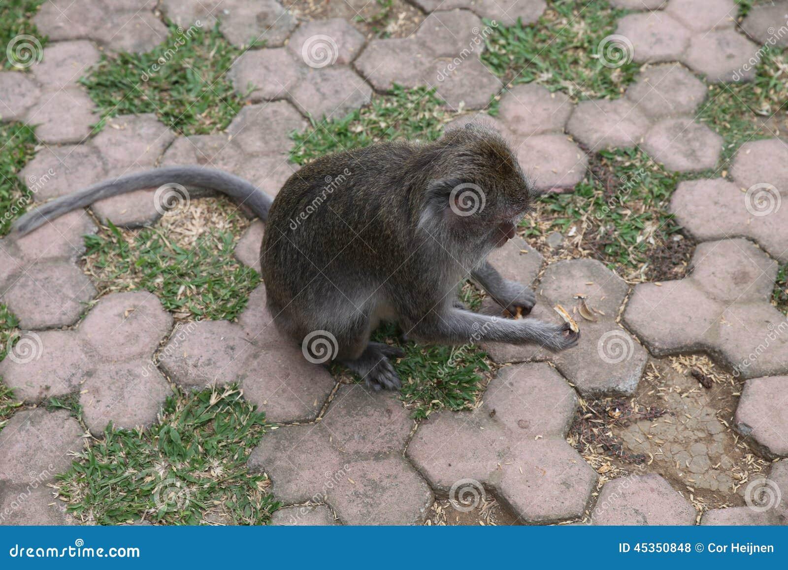 Forêt de singe