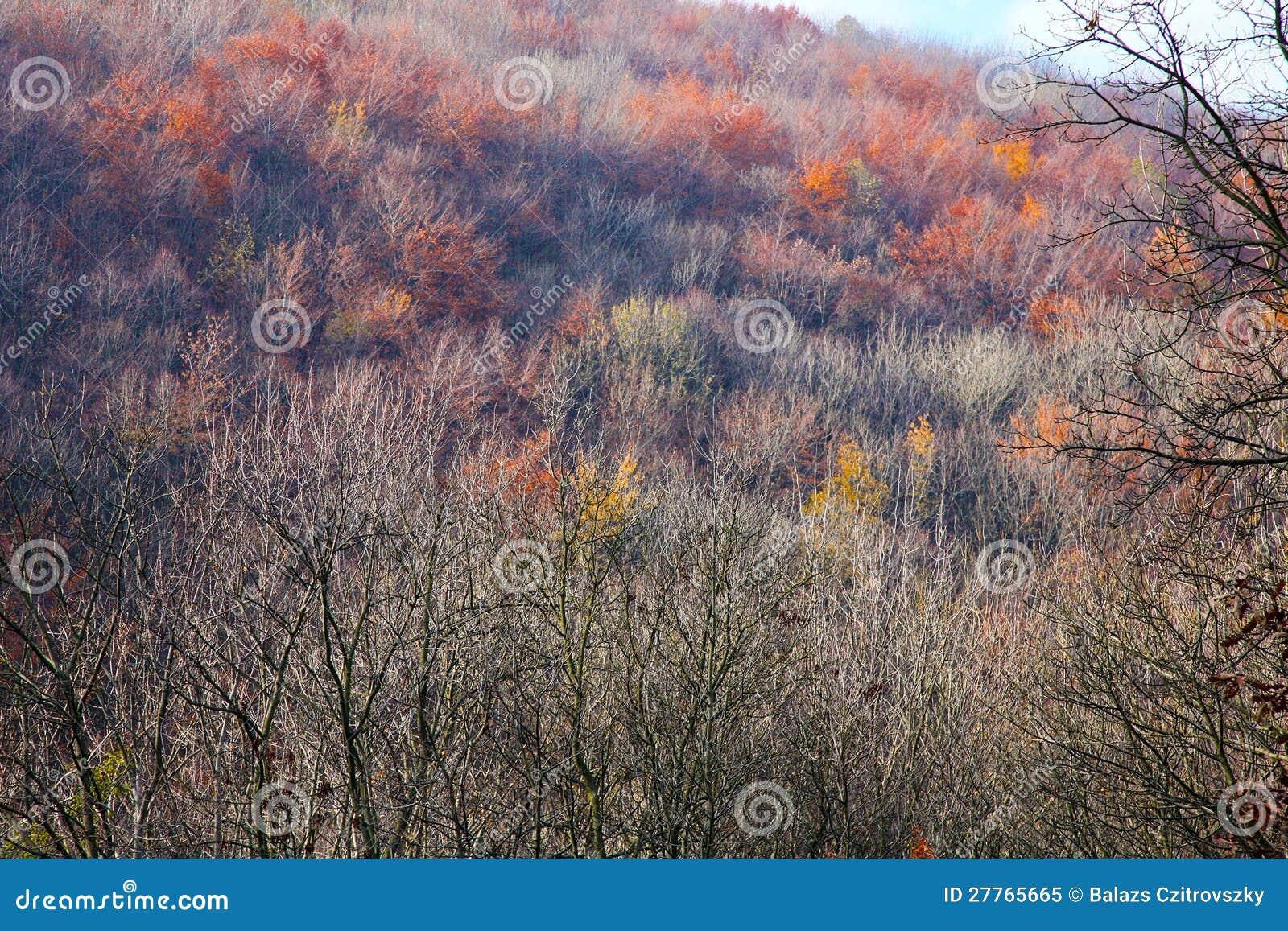 Forêt en automne tardif