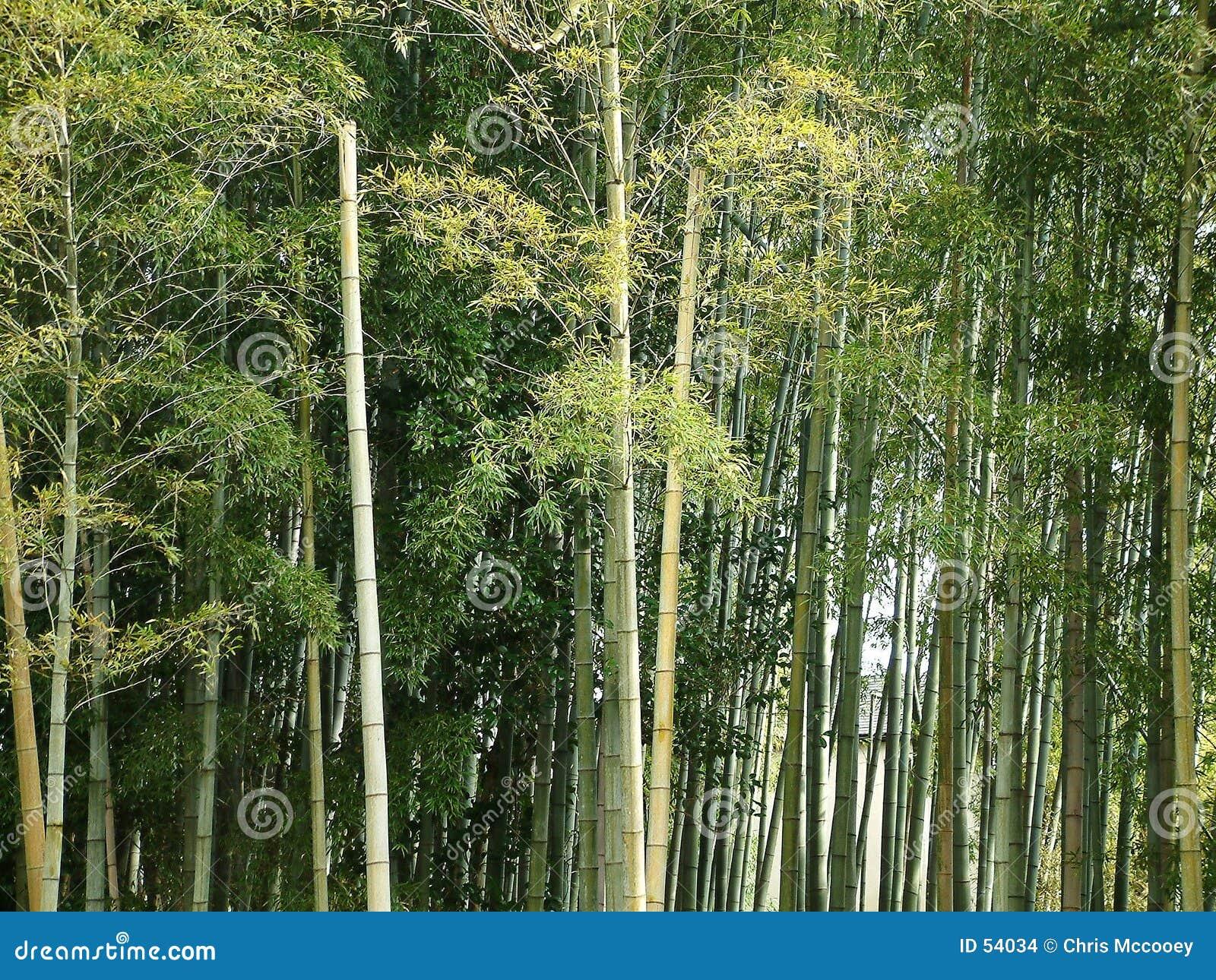 Download Forêt en bambou photo stock. Image du asie, japan, arbres - 54034