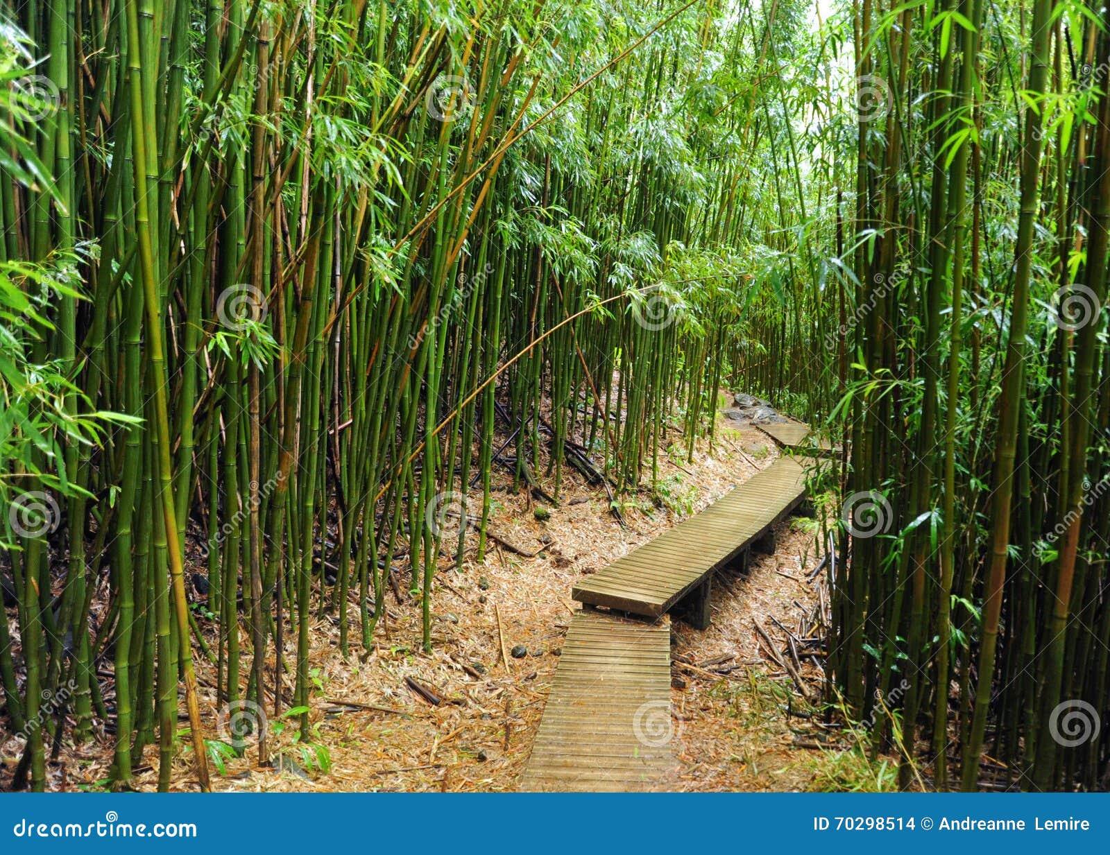 Forêt en bambou, Maui, Hawaï