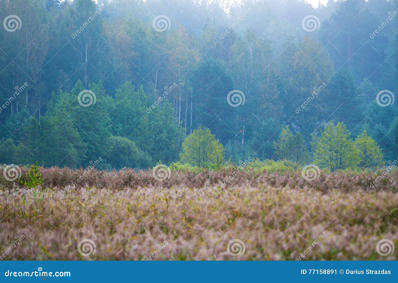 Forêt et marais, paysage lithuanien