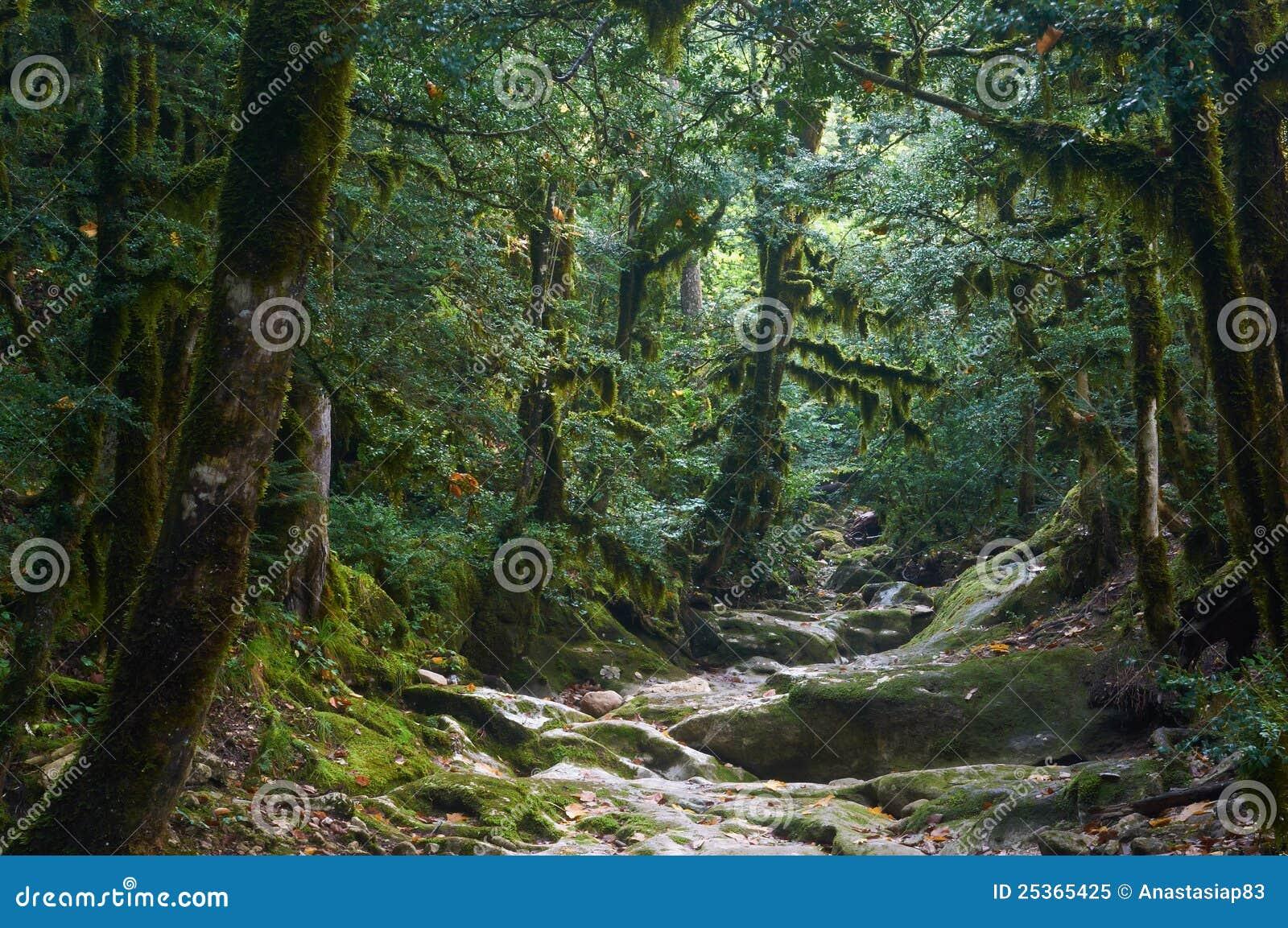 Forêt fantasmagorique de veille de la toussaint