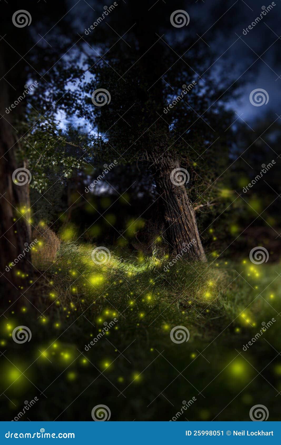 Forêt foncée enchantée