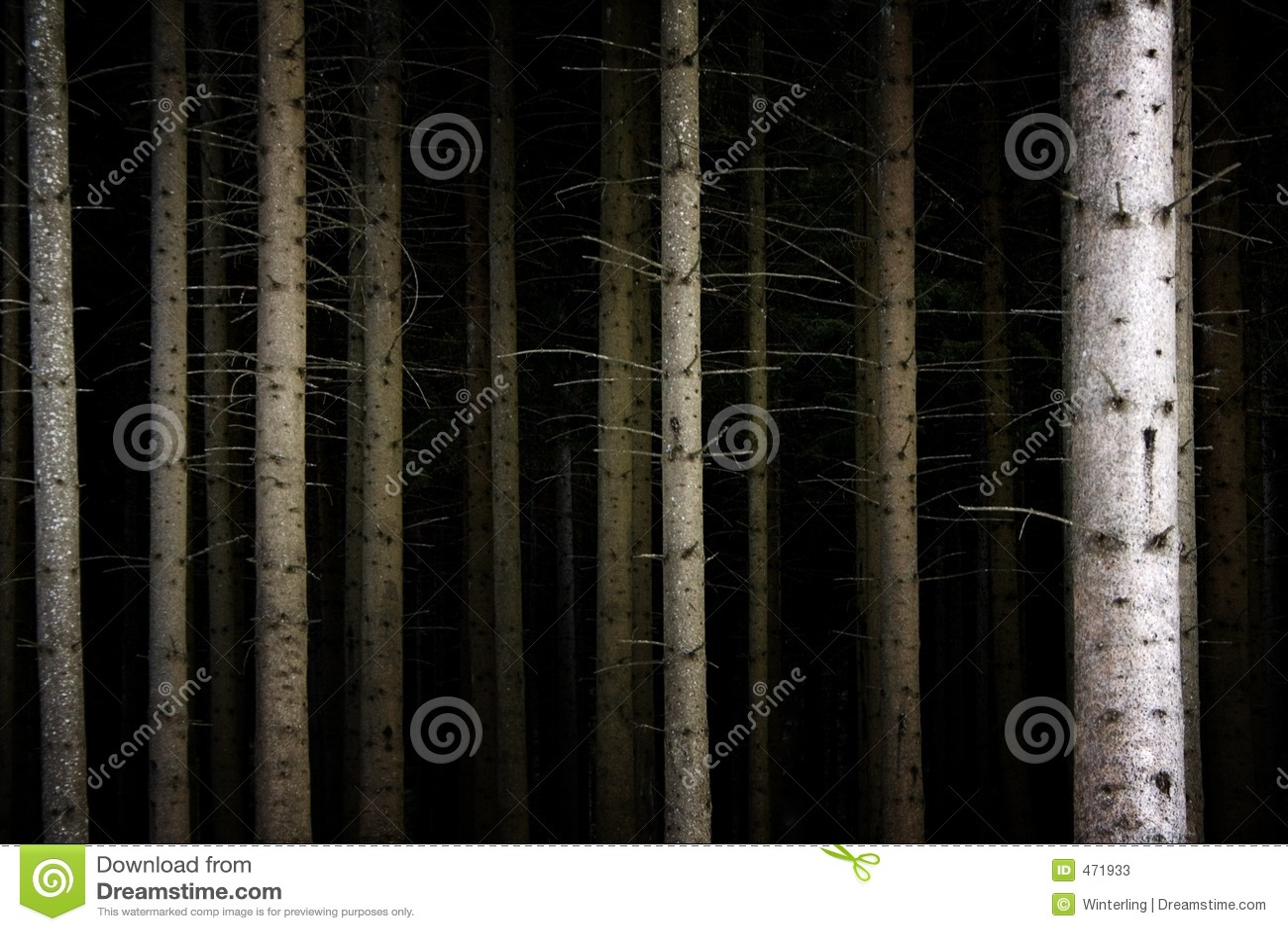 Forêt foncée profonde
