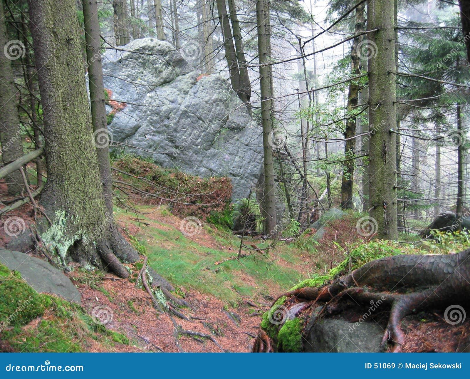 Download Forêt II image stock. Image du nature, ressort, montagne - 51069