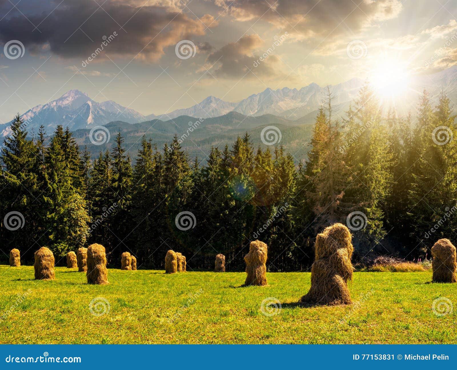 Forêt impeccable sur un pré dans Tatras au coucher du soleil